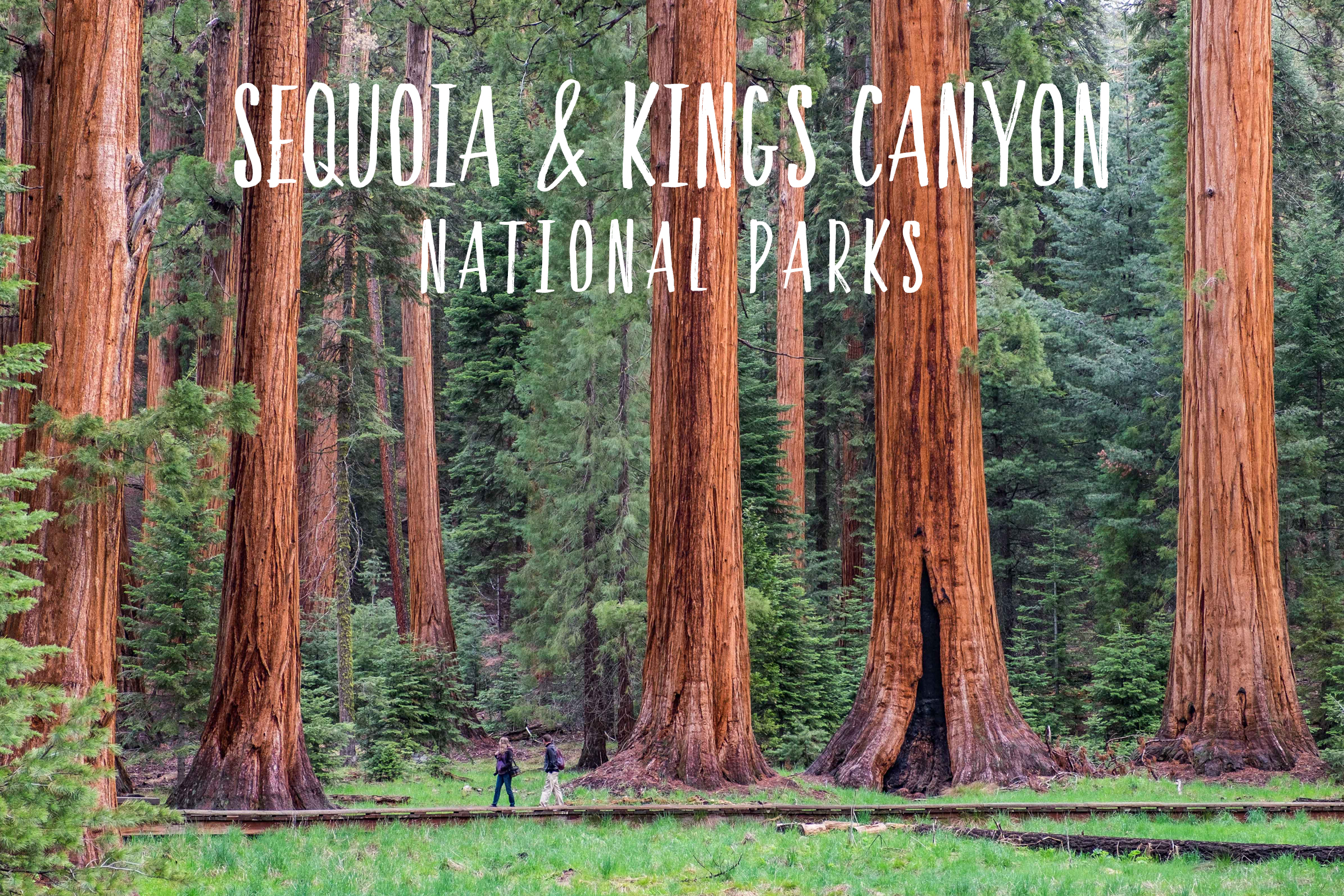 Parks 22&23/59: Sequoia & Kings Canyon National Park in California