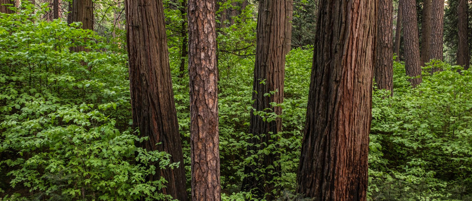 Yosemite National Park - 019.jpg
