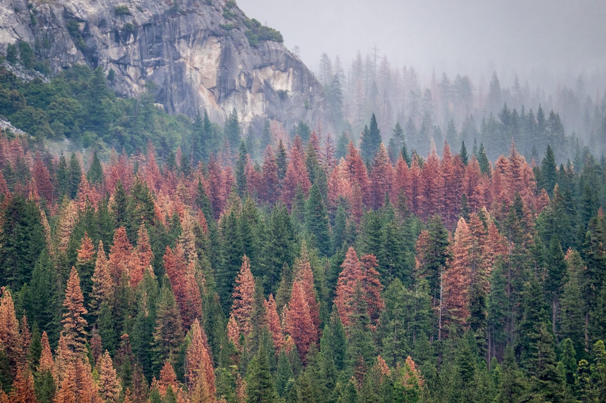 Yosemite National Park - 067.jpg