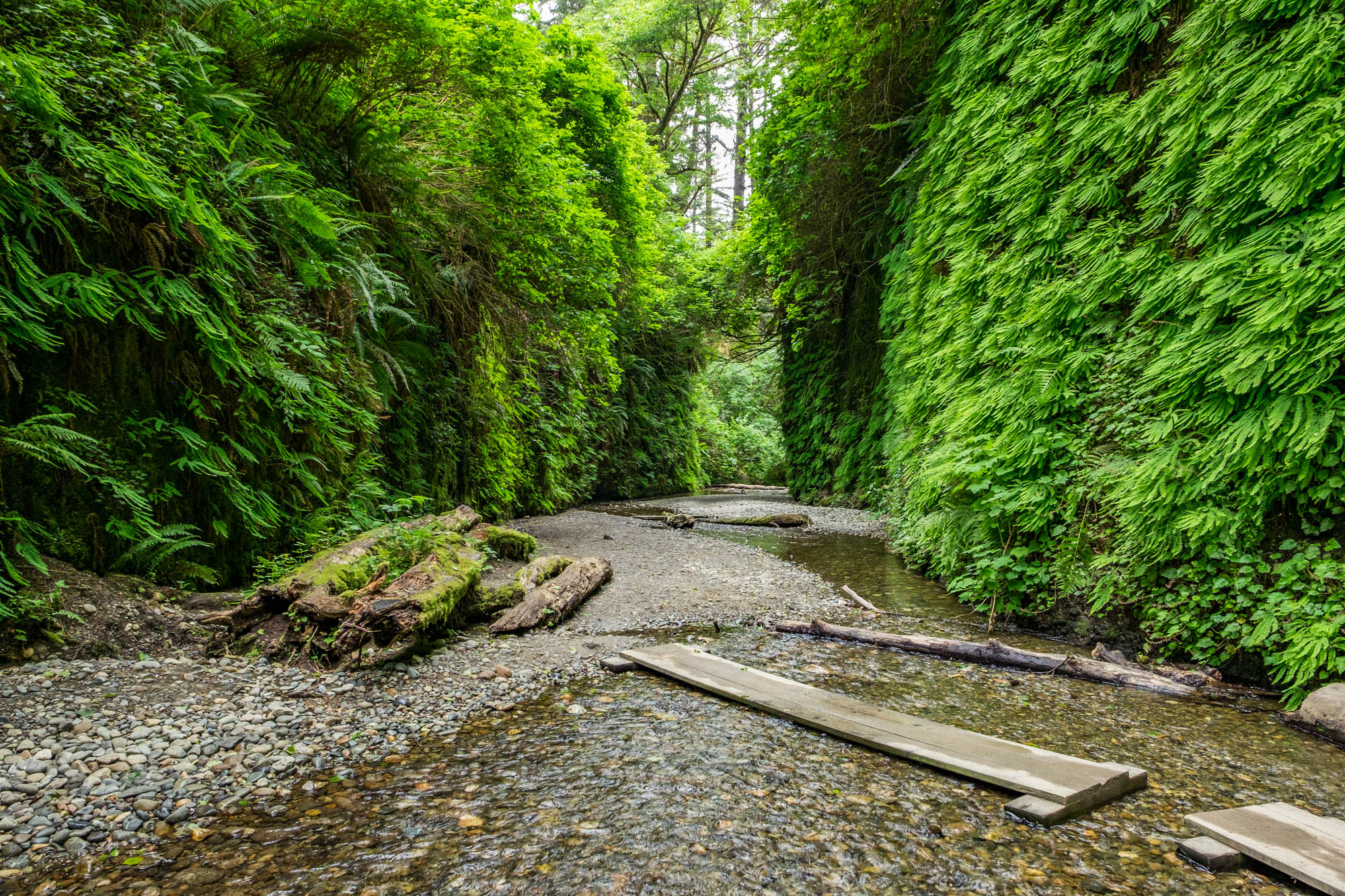 Fern Canyon is one of the most visited, and incredible, places within the park. Imagine a canyon covered in ferns that you can walk through....amazing!