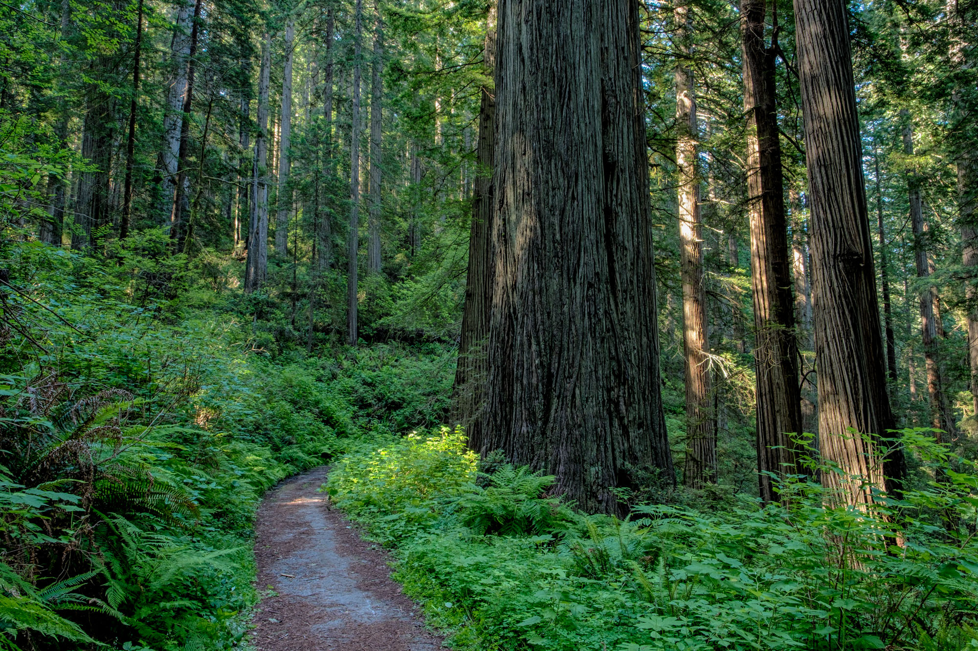 Redwoods National Park - 061.jpg