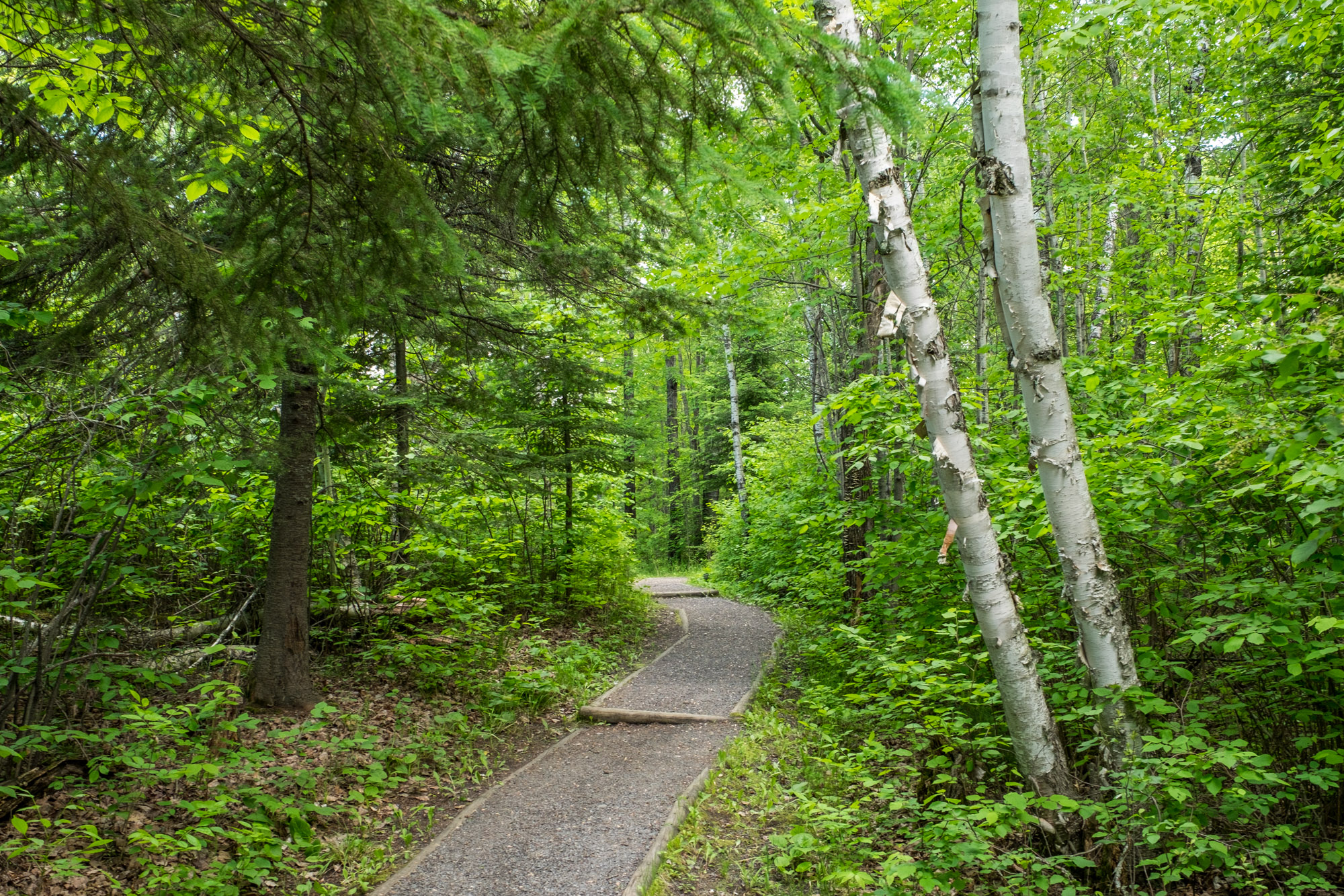 Trail near the Ash River Visitor Center.