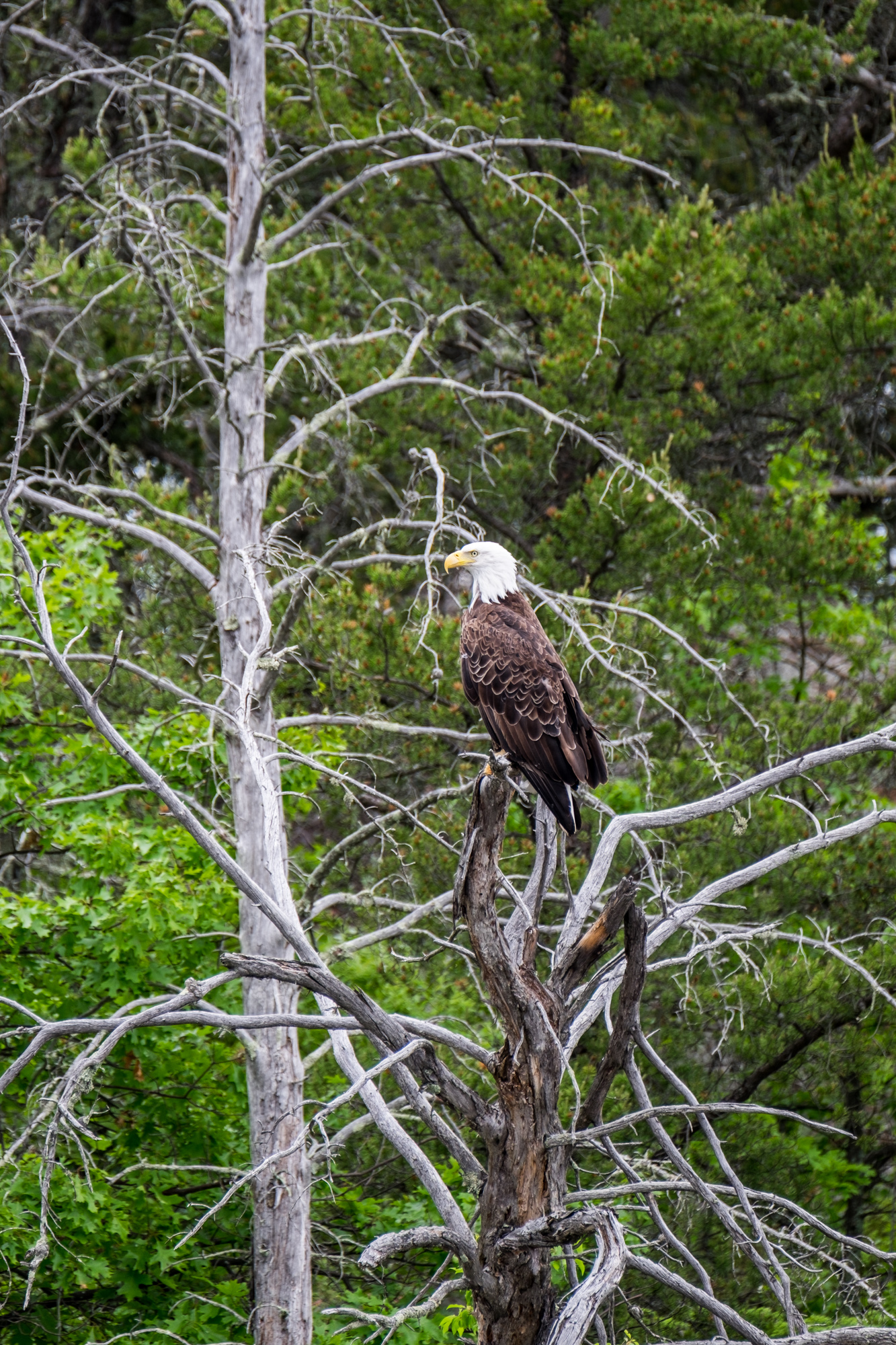 Bald Eagles are a common sight in this park.
