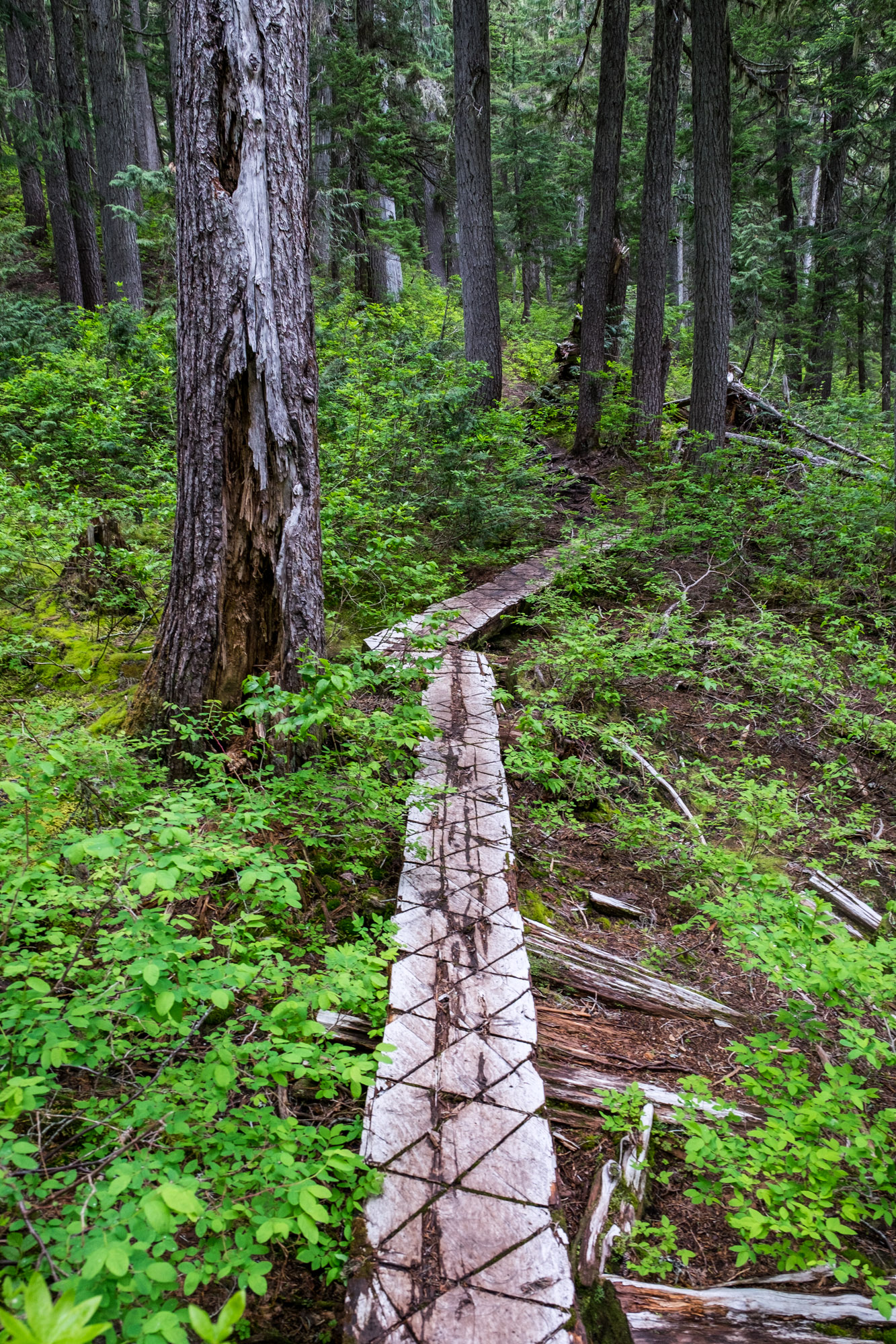 North Cascades National Park - 030.jpg