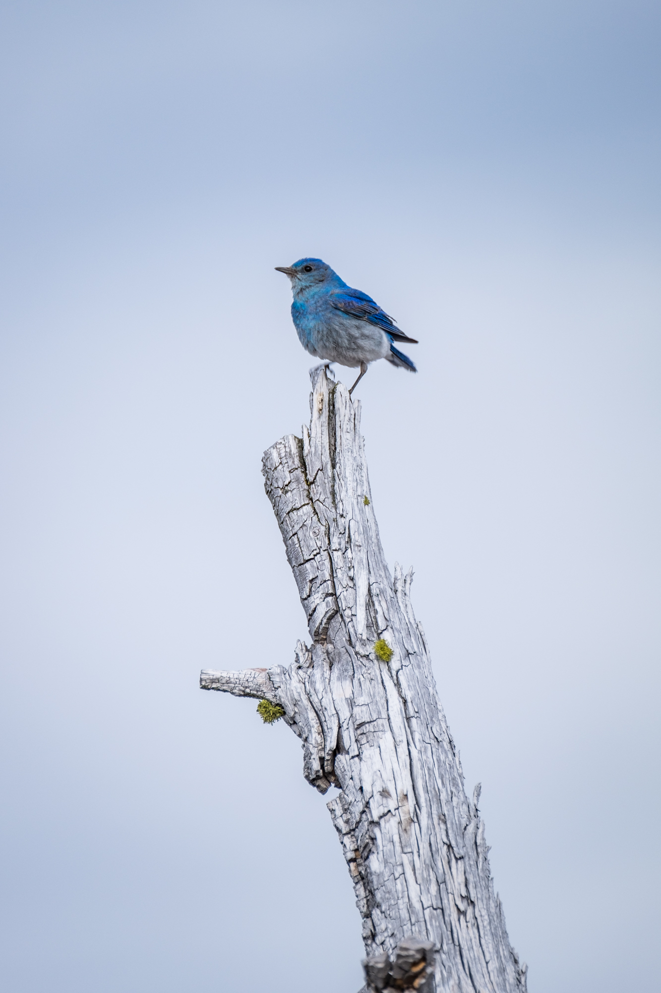 I am not sure what kind of bird this is, but it matched the crystal blue waters of the lake.