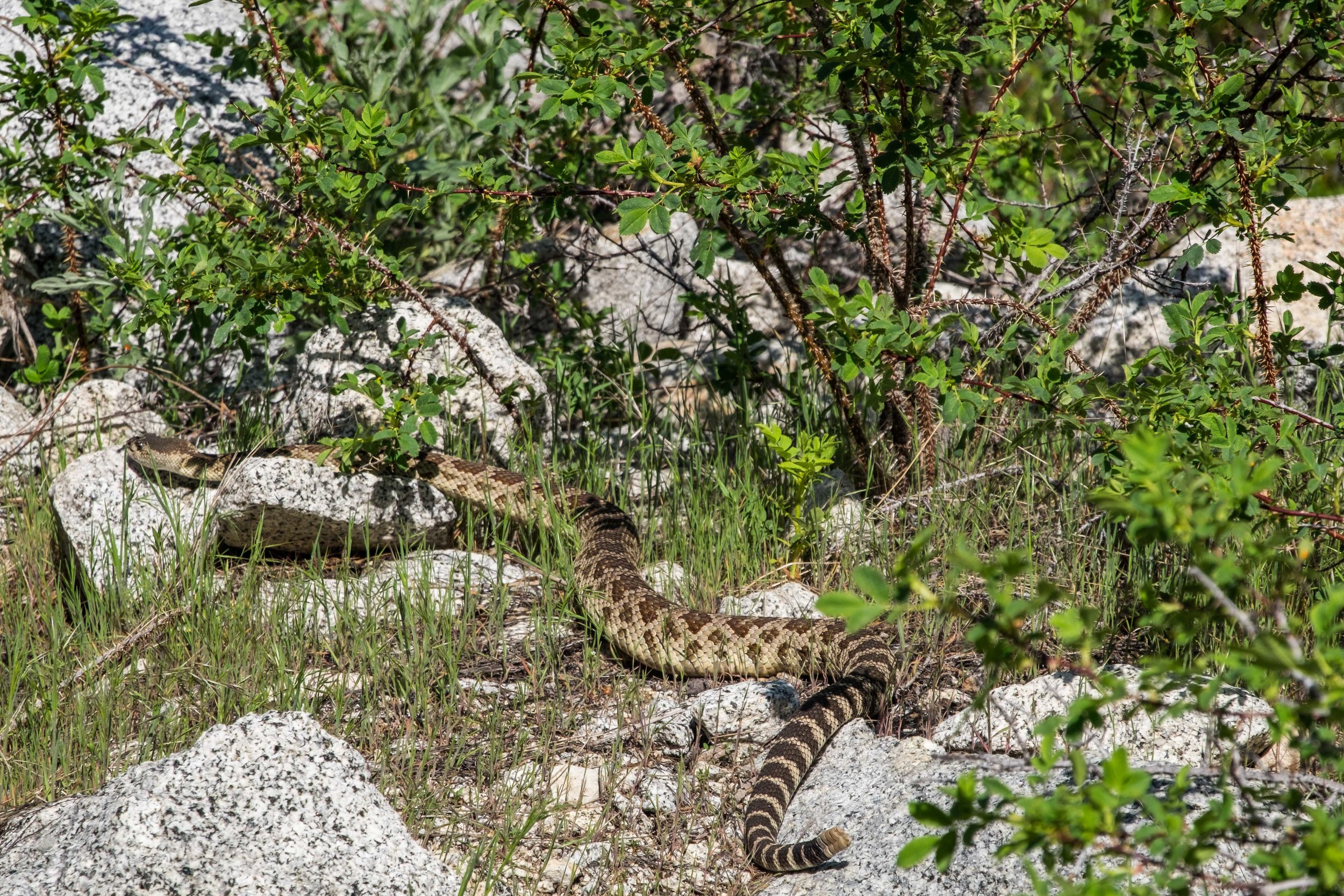 20160512-SP- Kings Canyon National Park-_DSF4245.jpg