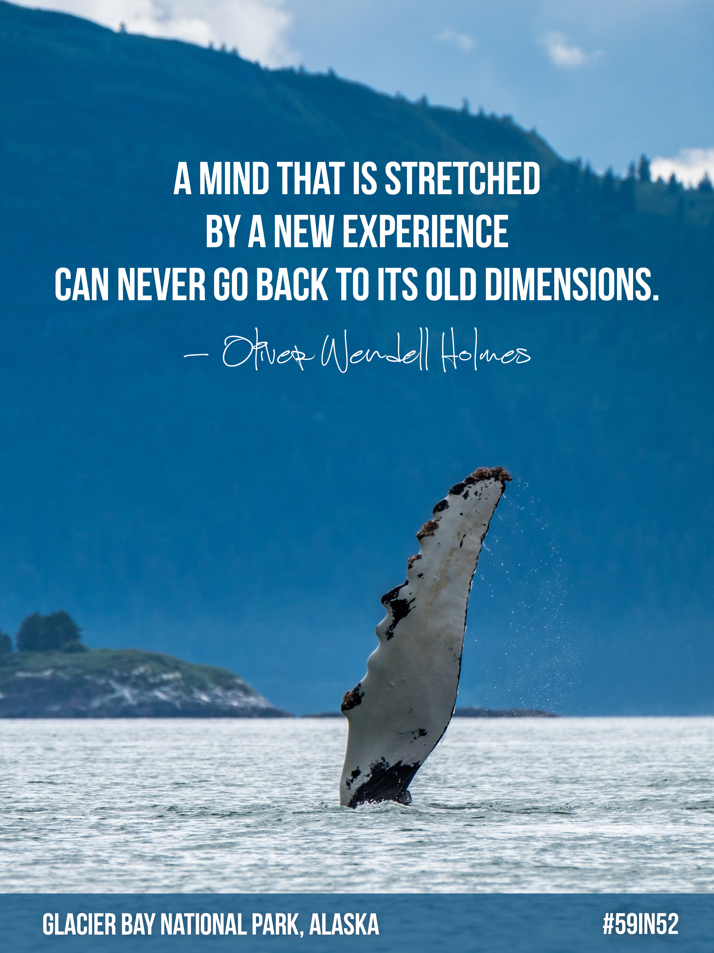 """""""A mind that is stretched by a new experience can never go back to its old dimensions."""" - Oliver Wendell Holmes"""