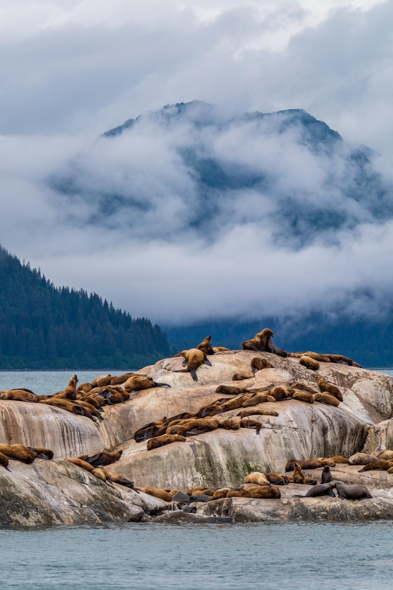 Glacier Bay National Park - 011.jpg