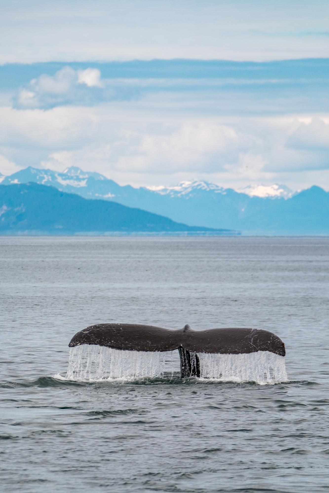 Glacier Bay National Park - 026.jpg