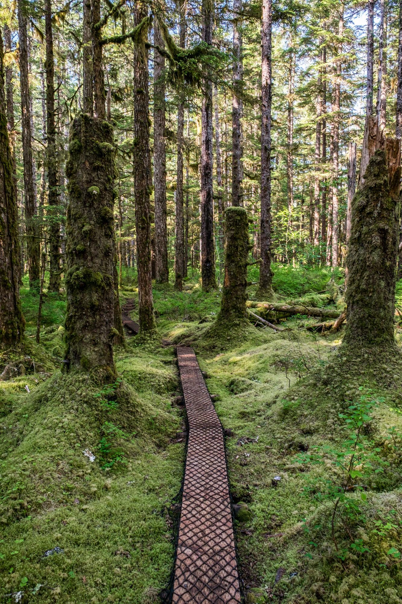 The trails around the Glacier Bay Lodge are inviting.