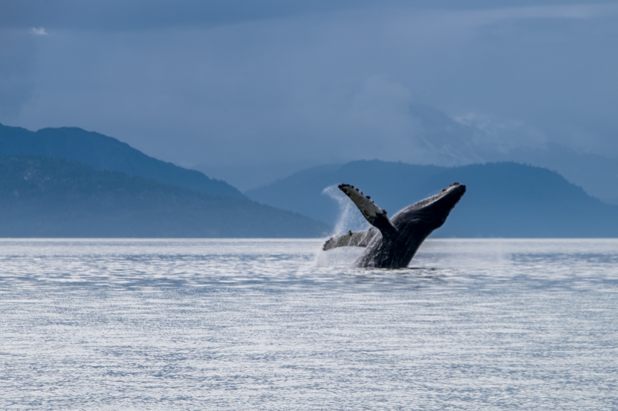 Finally, we got up close and personal with some whales, and it was the highlight of our time in Glacier Bay.