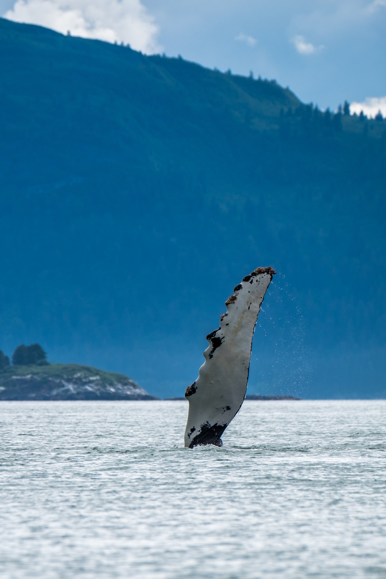 """The whales waved """"hi"""" to us."""