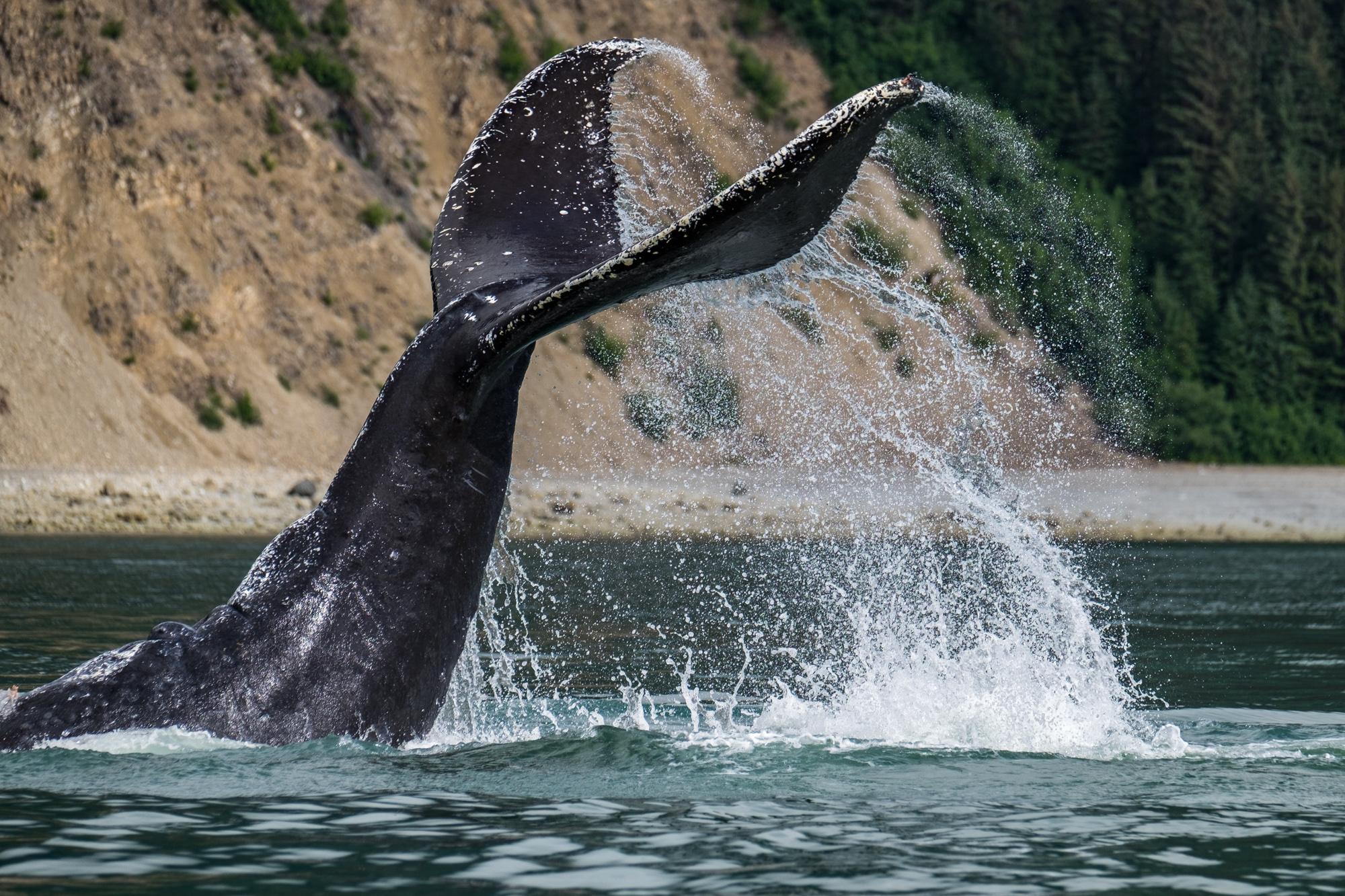 Glacier Bay National Park - 063.jpg