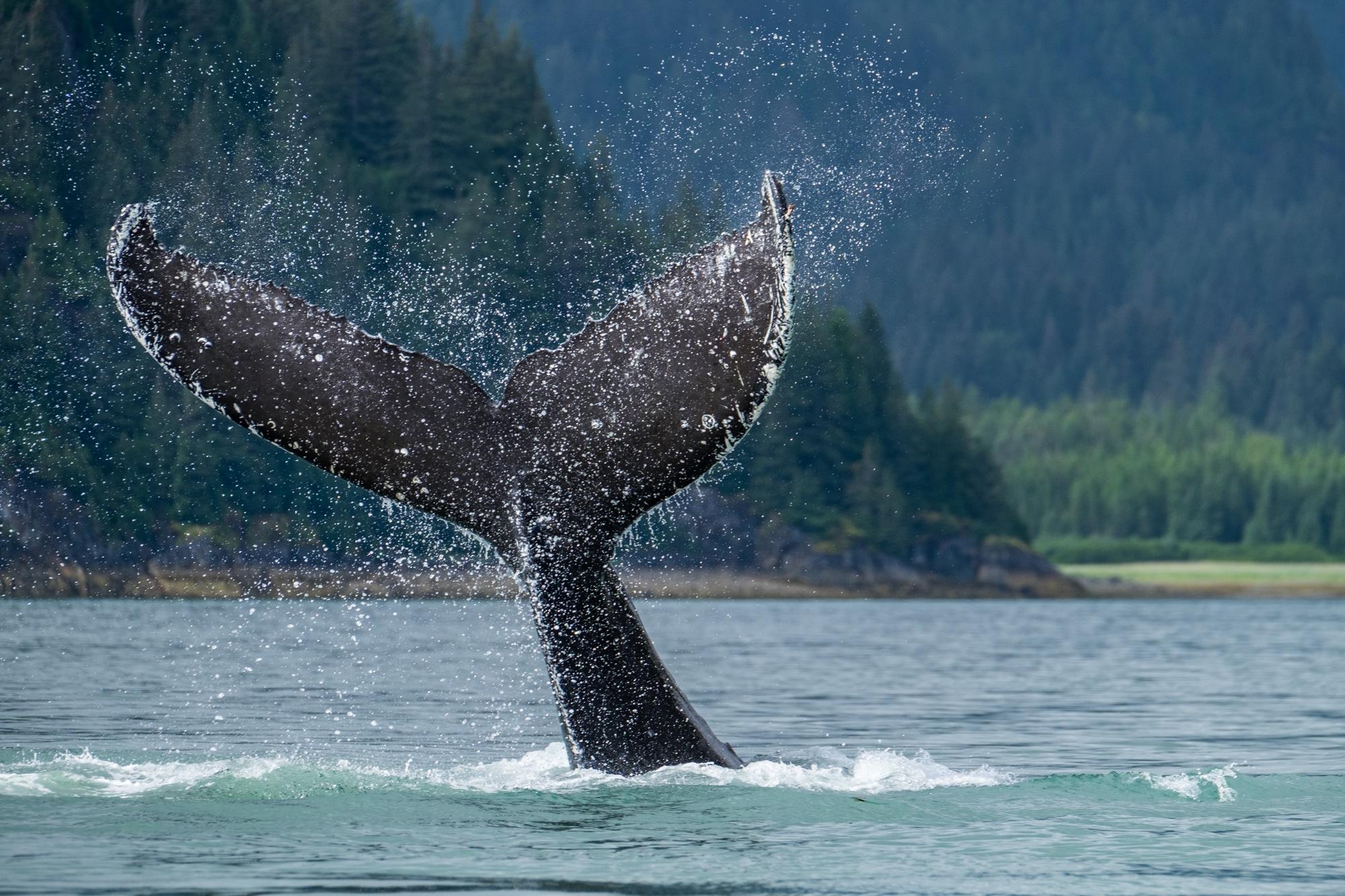Glacier Bay National Park - 064.jpg