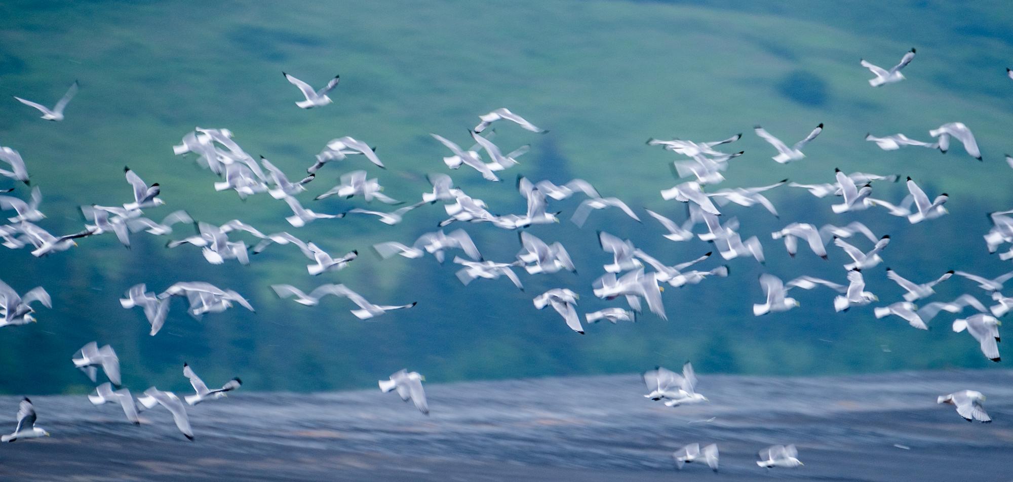 Kenai Fjords National Park - 036.jpg