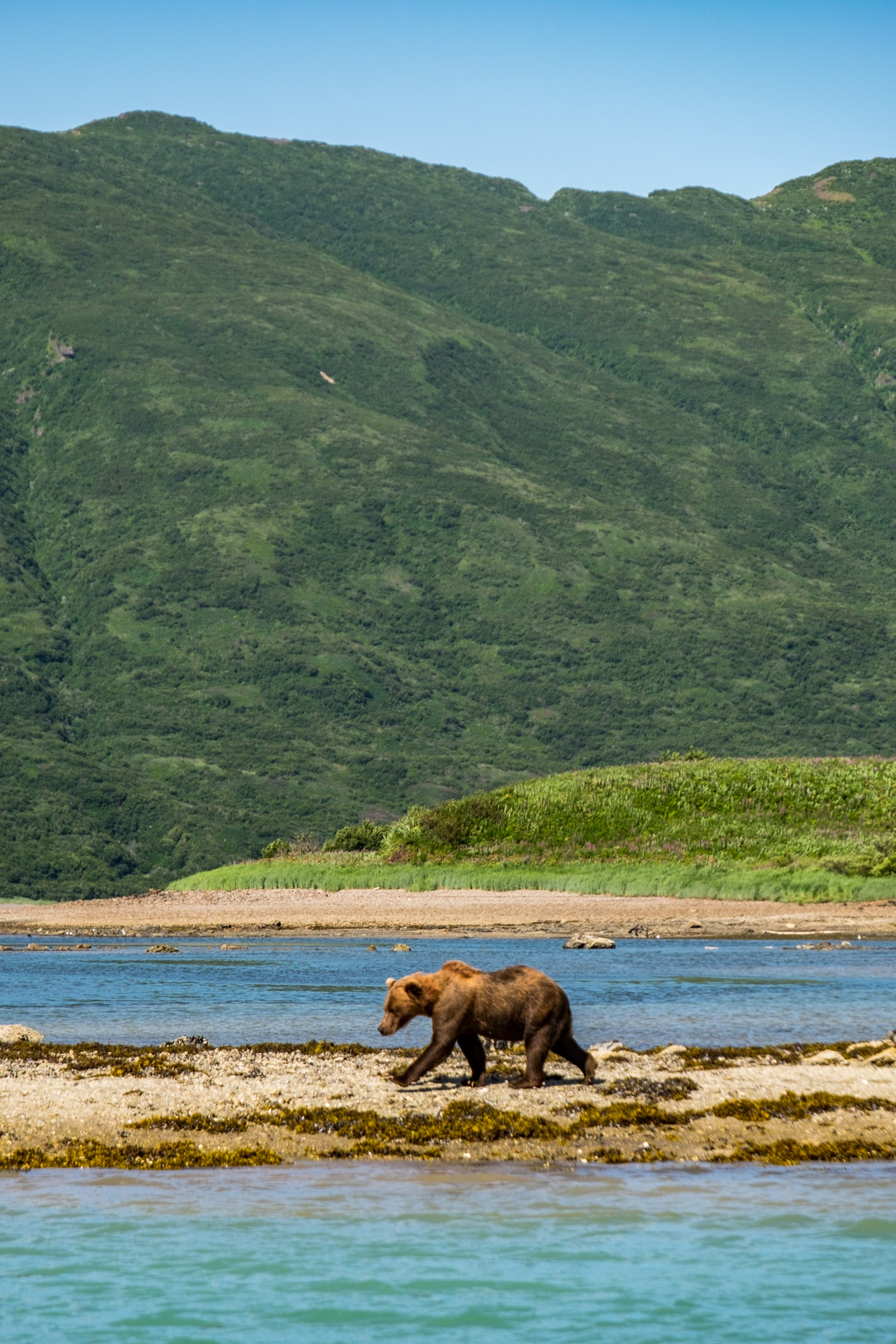 Katmai National Park - 052.jpg