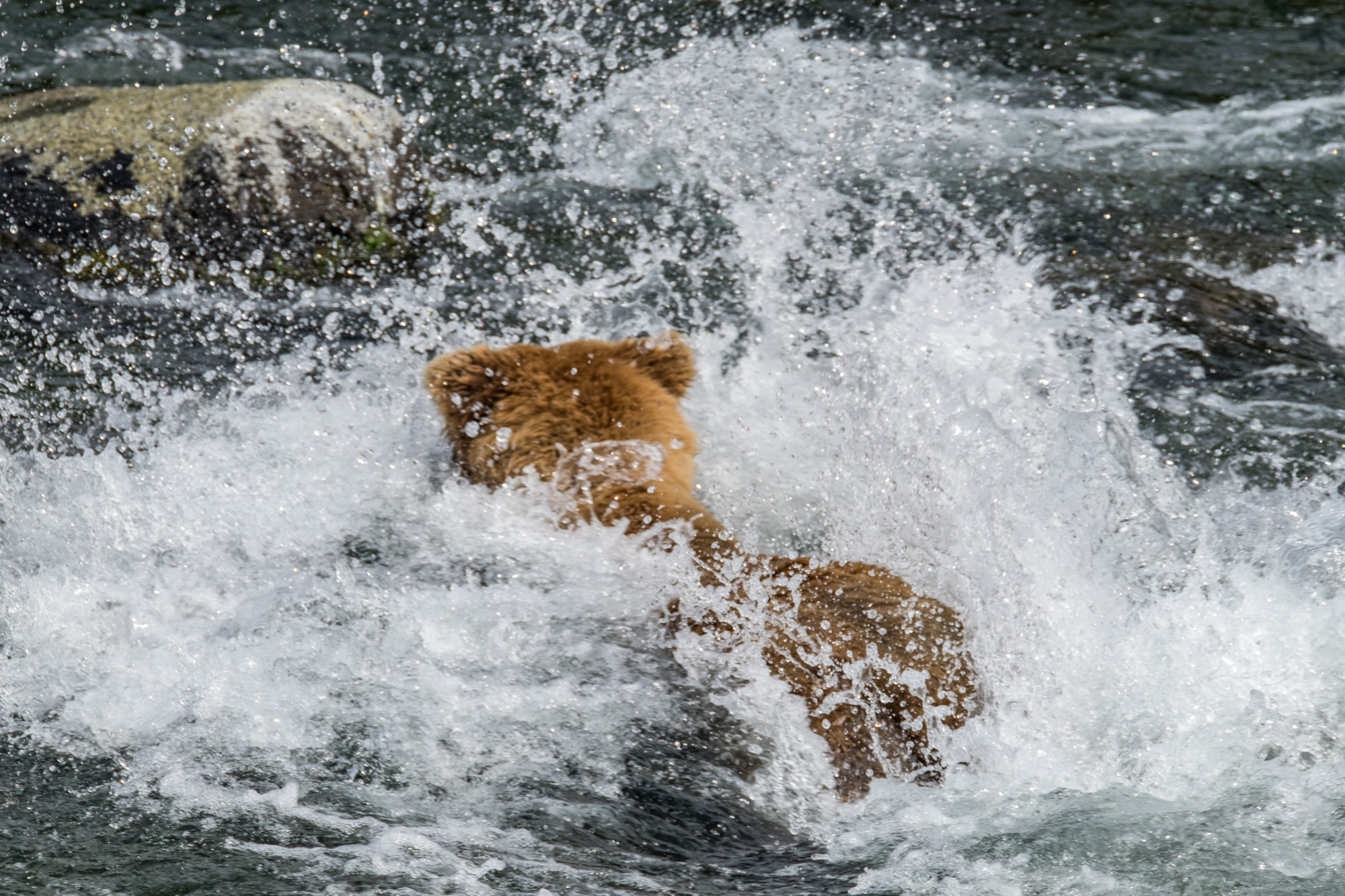Katmai National Park - 074.jpg