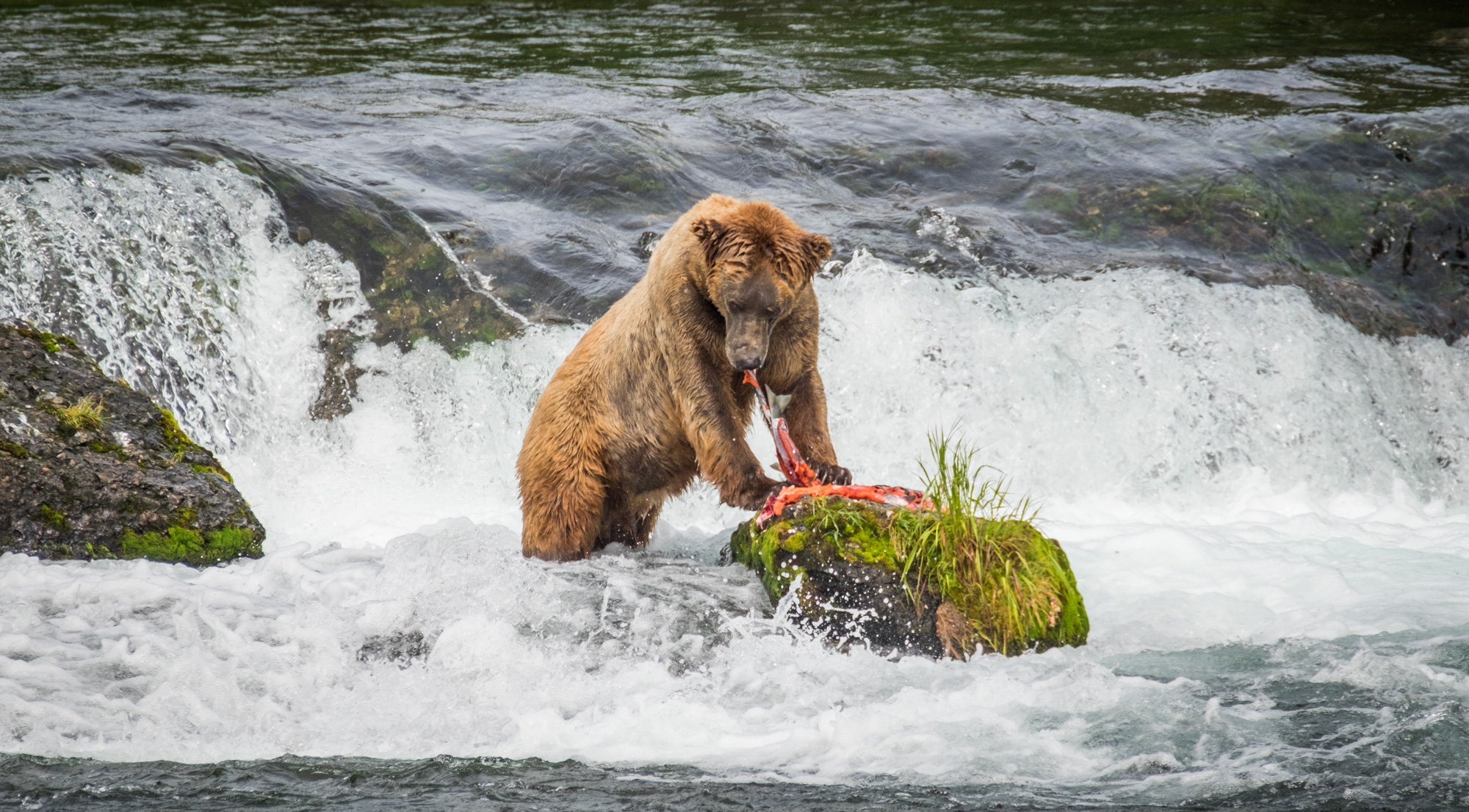 Katmai National Park - 077.jpg