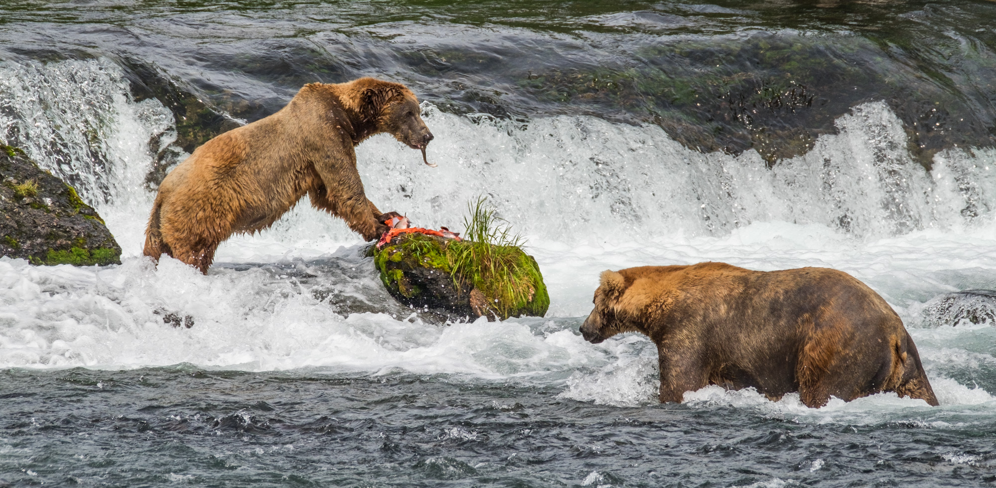 Katmai National Park - 076.jpg