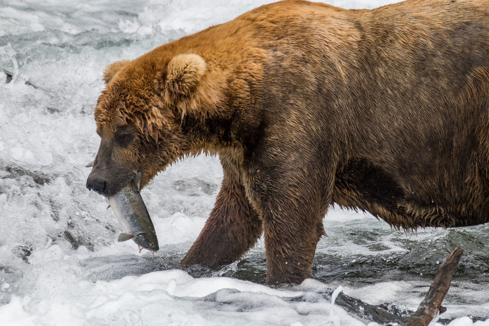 Katmai National Park - 078.jpg