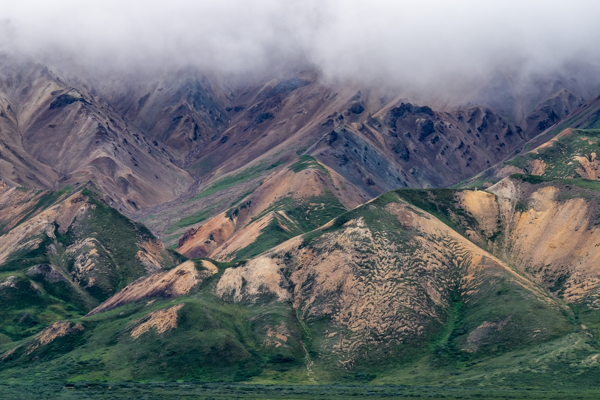 Denali National Park - 056.jpg