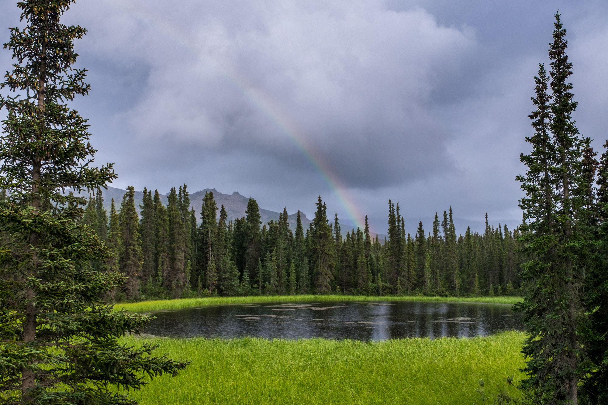 We had a lot of rain while in Denali, but those showers can sometimes bring rainbows.