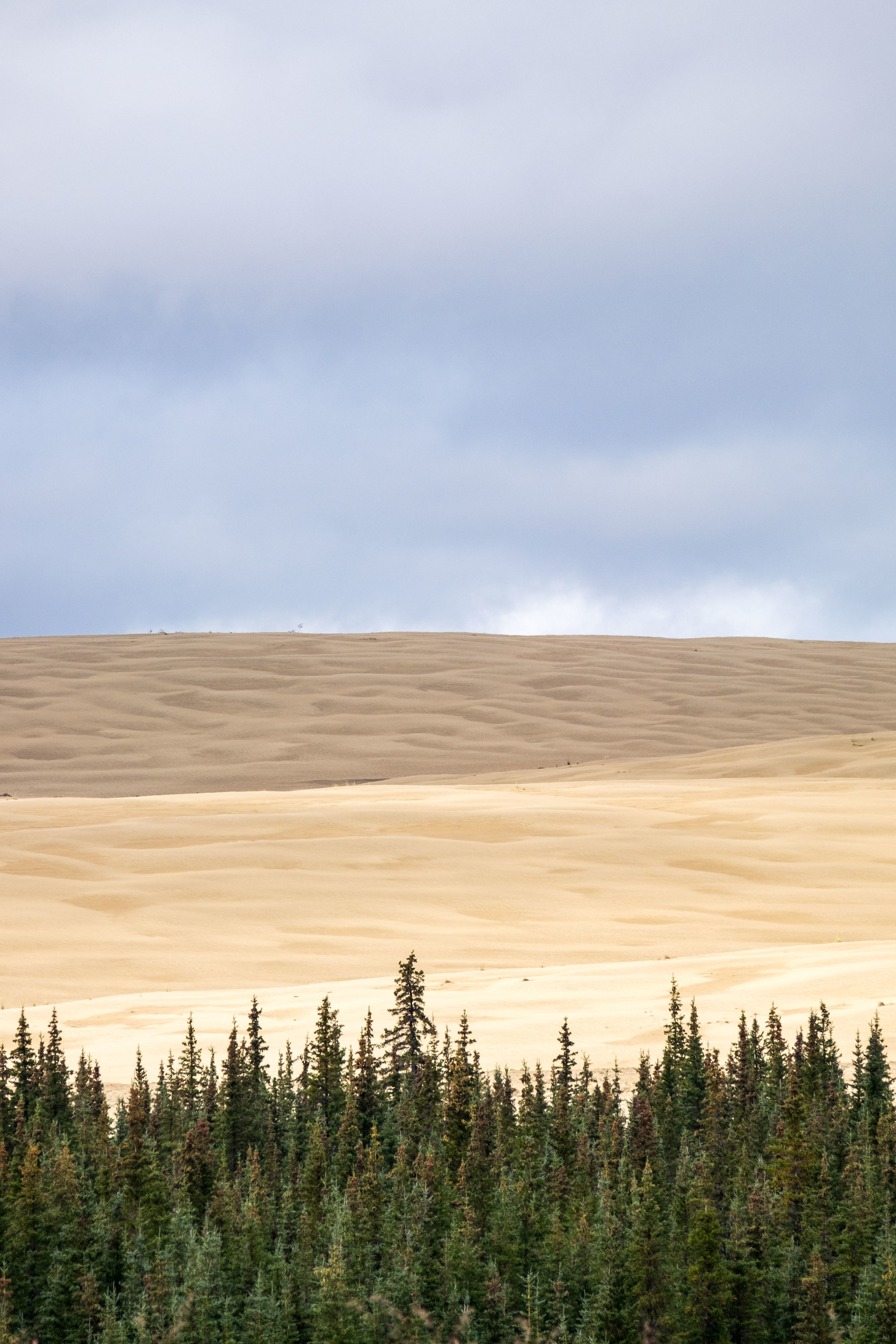 The contrast between forest and dunes really fascinated me the entire time we were here.