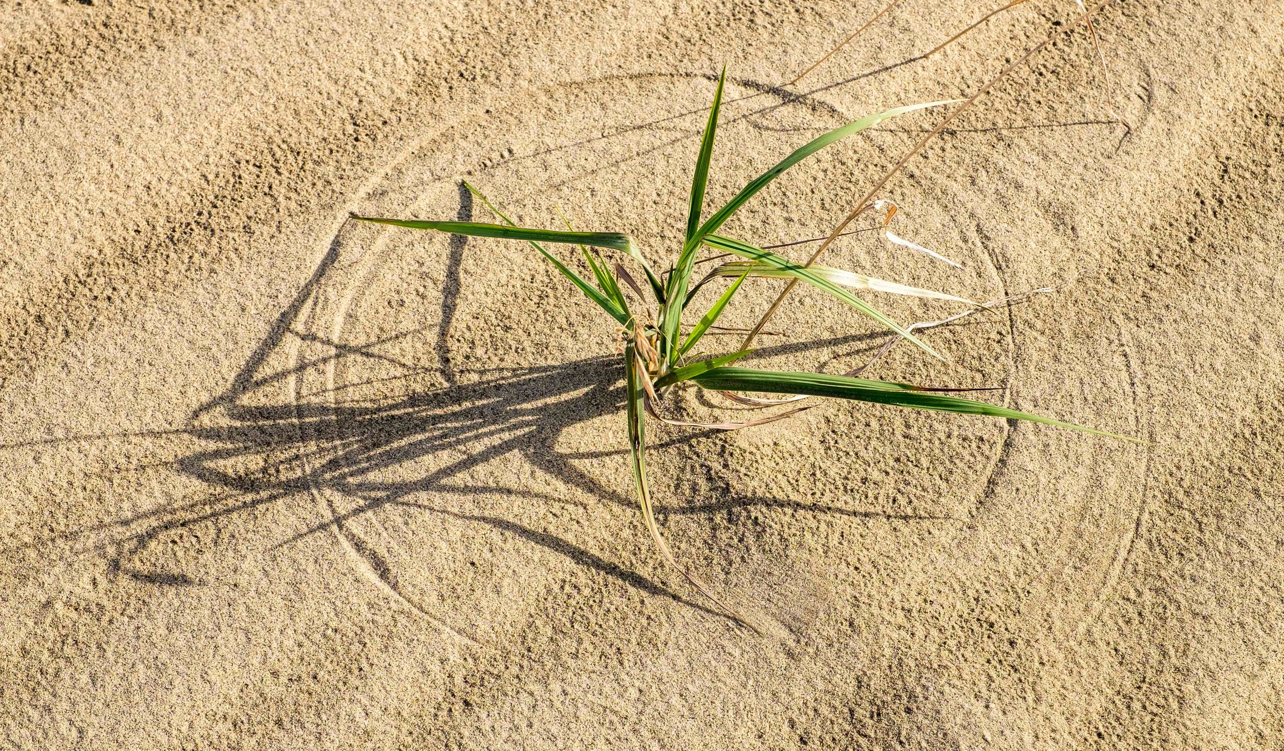 Wind blows the leaves and forms these circles around the desert plants.