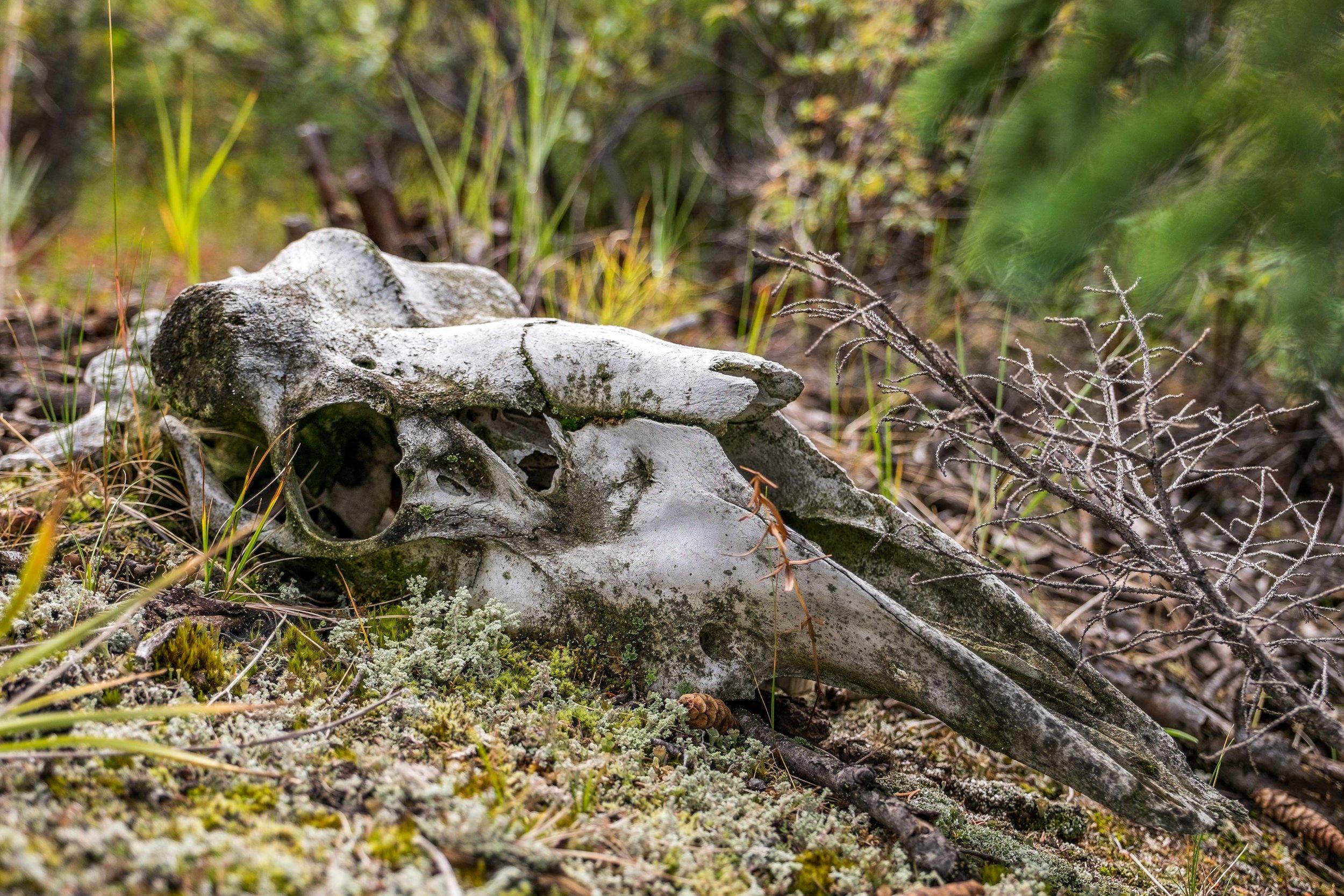 We also found some dead animals.
