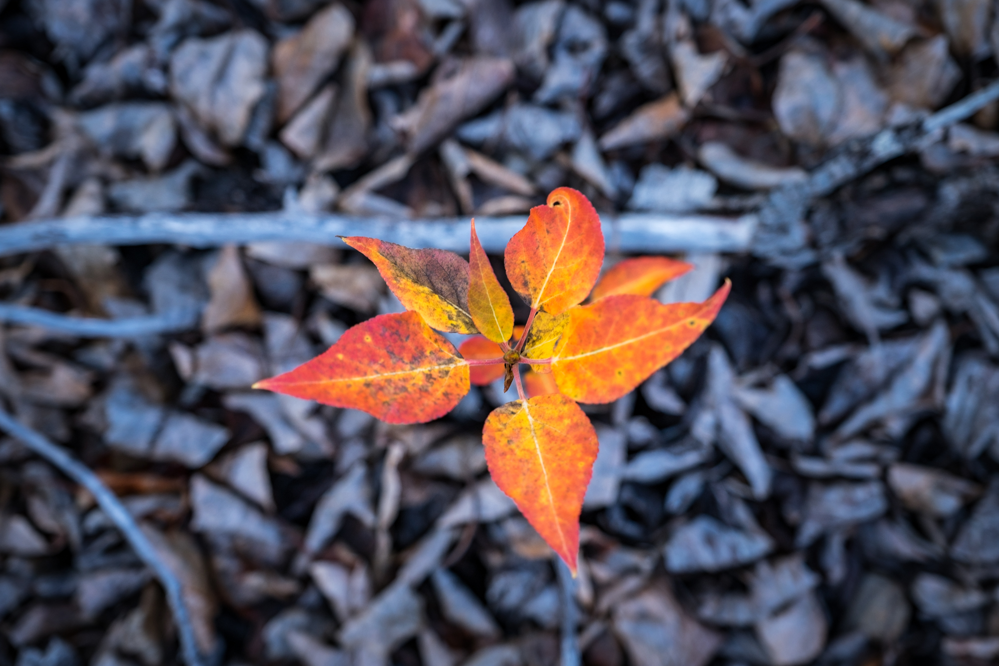 Fall foliage sprouts from the forest floor.