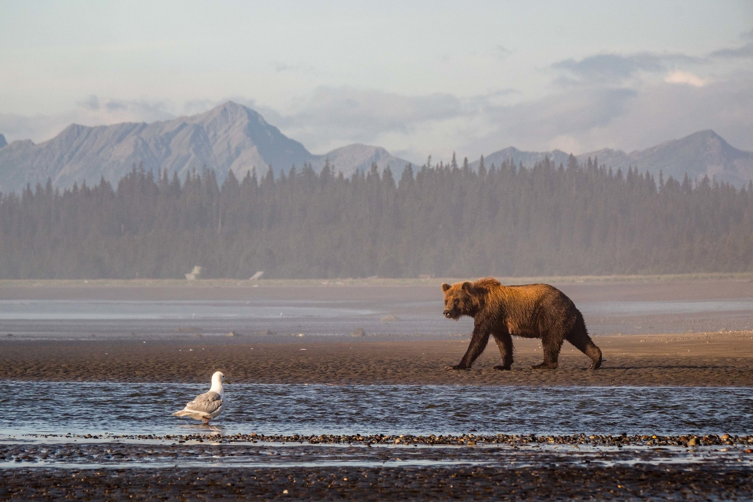 Lake Clark National Park-050.jpg