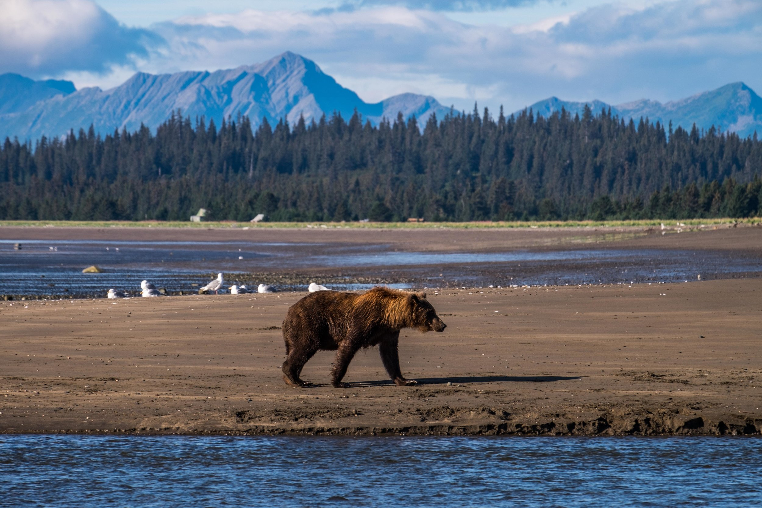 Lake Clark National Park-068.jpg