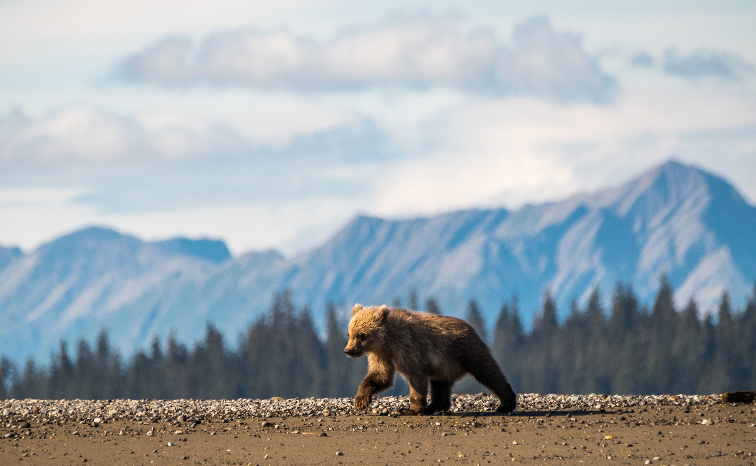 A cub and the amazing wilderness backdrop of Lake Clark National Park.