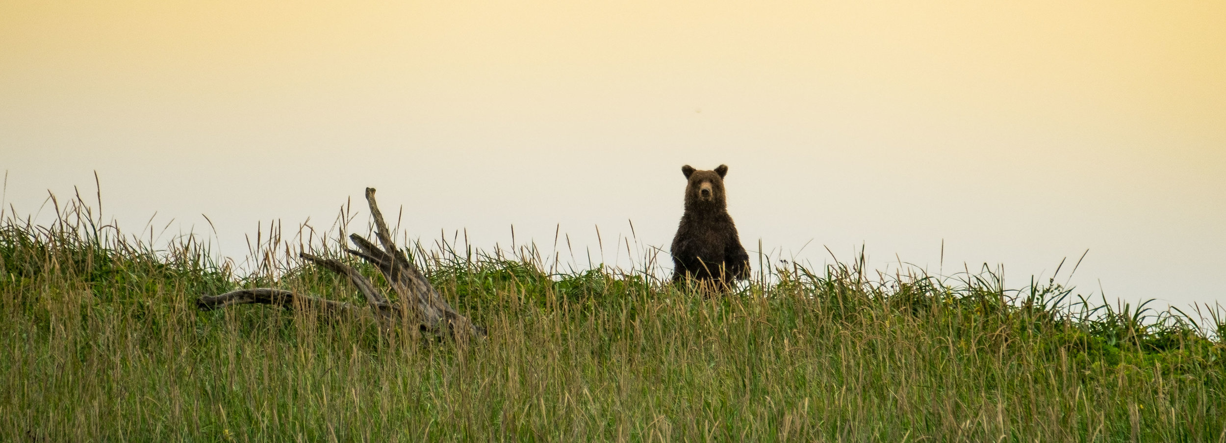 Bear checking us out in Lake Clark National Park!