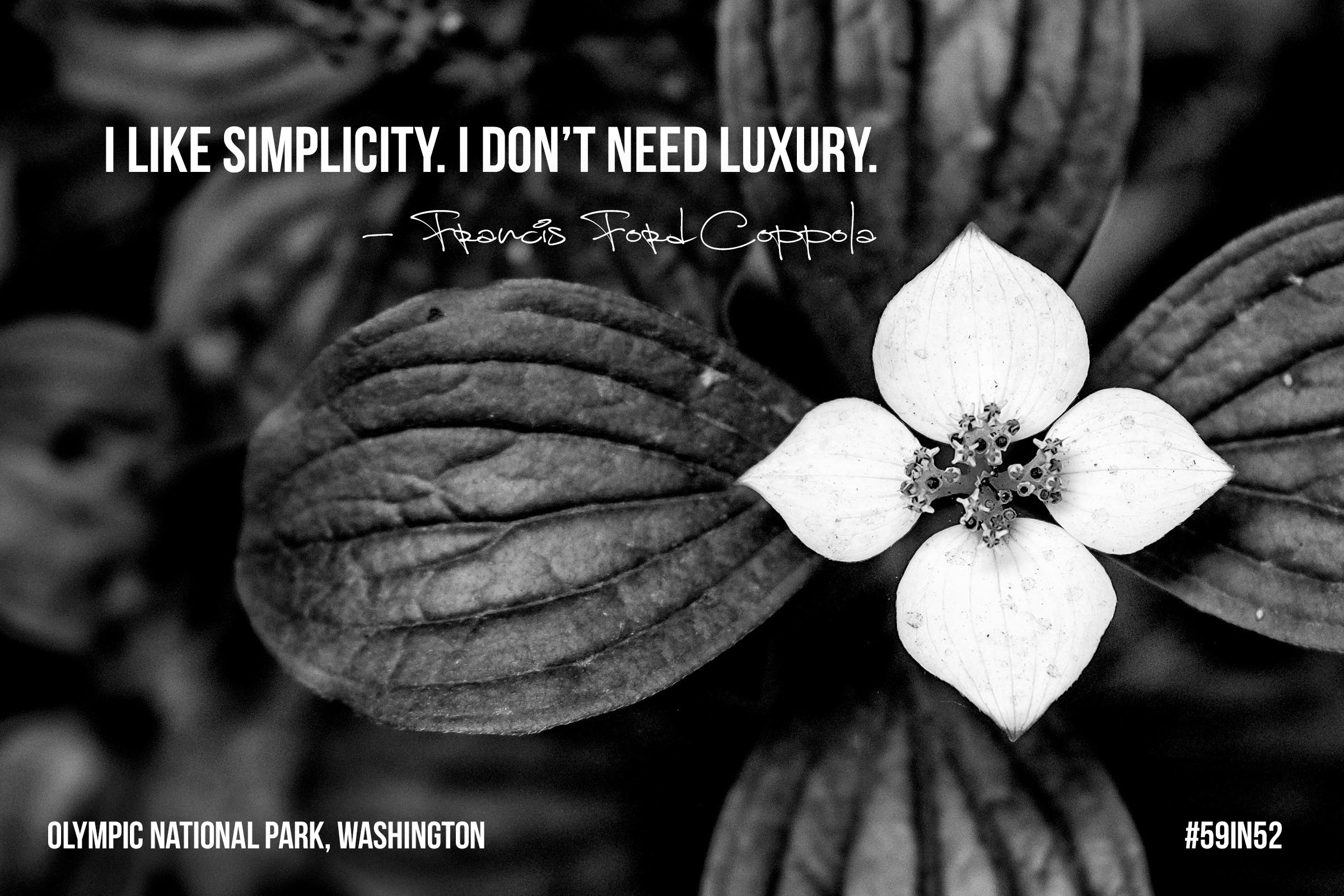 """I like simplicity. I don't need luxury.' - Francis Ford Coppola"