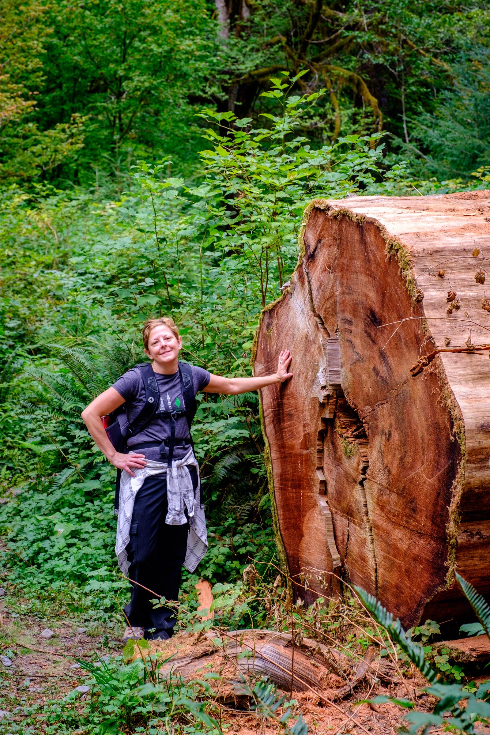 This tree's diameter is taller then Jen!