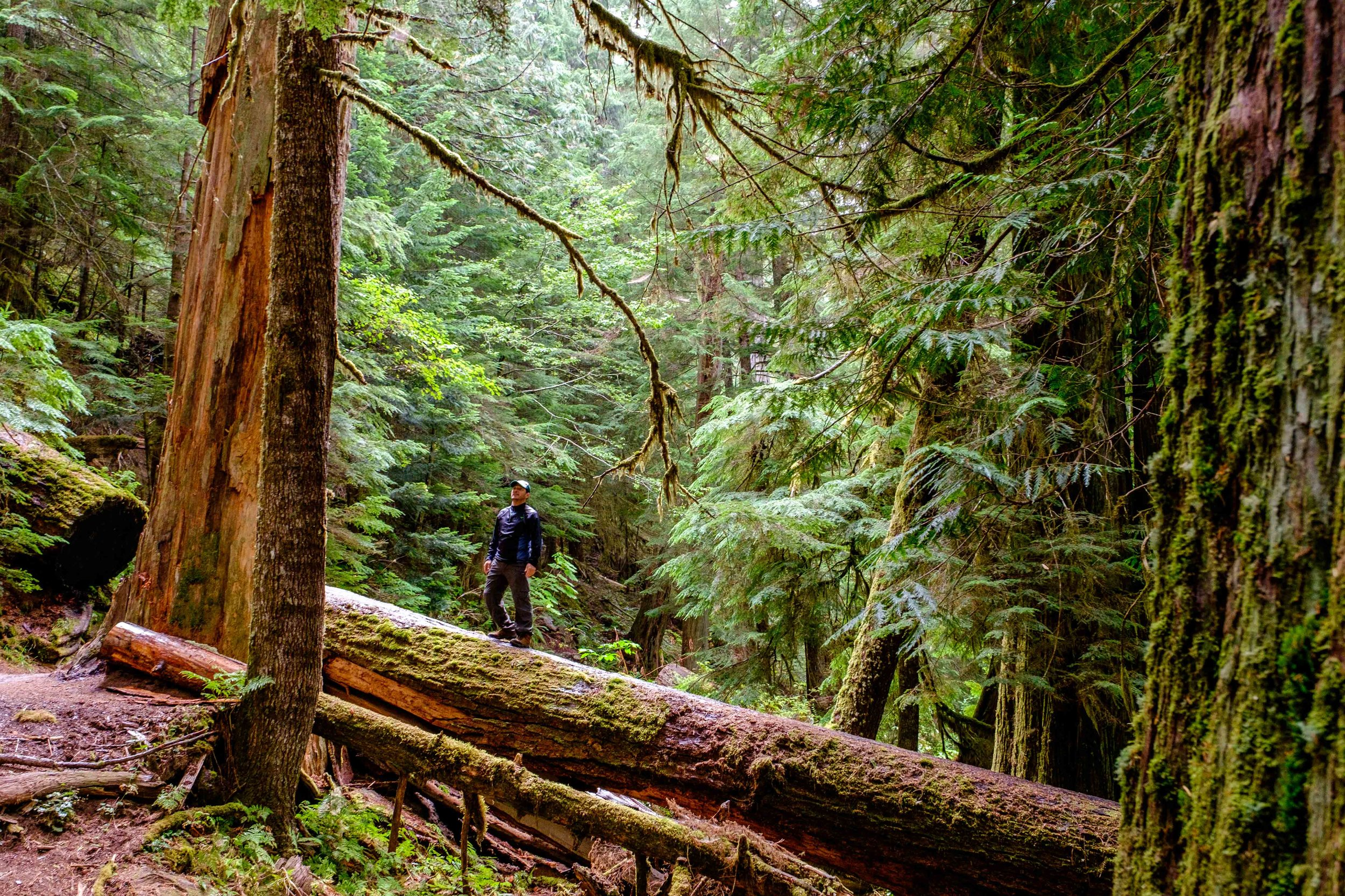 Hiking through old-growth at the Grove of the Patriarchs in Ohanapecosh.