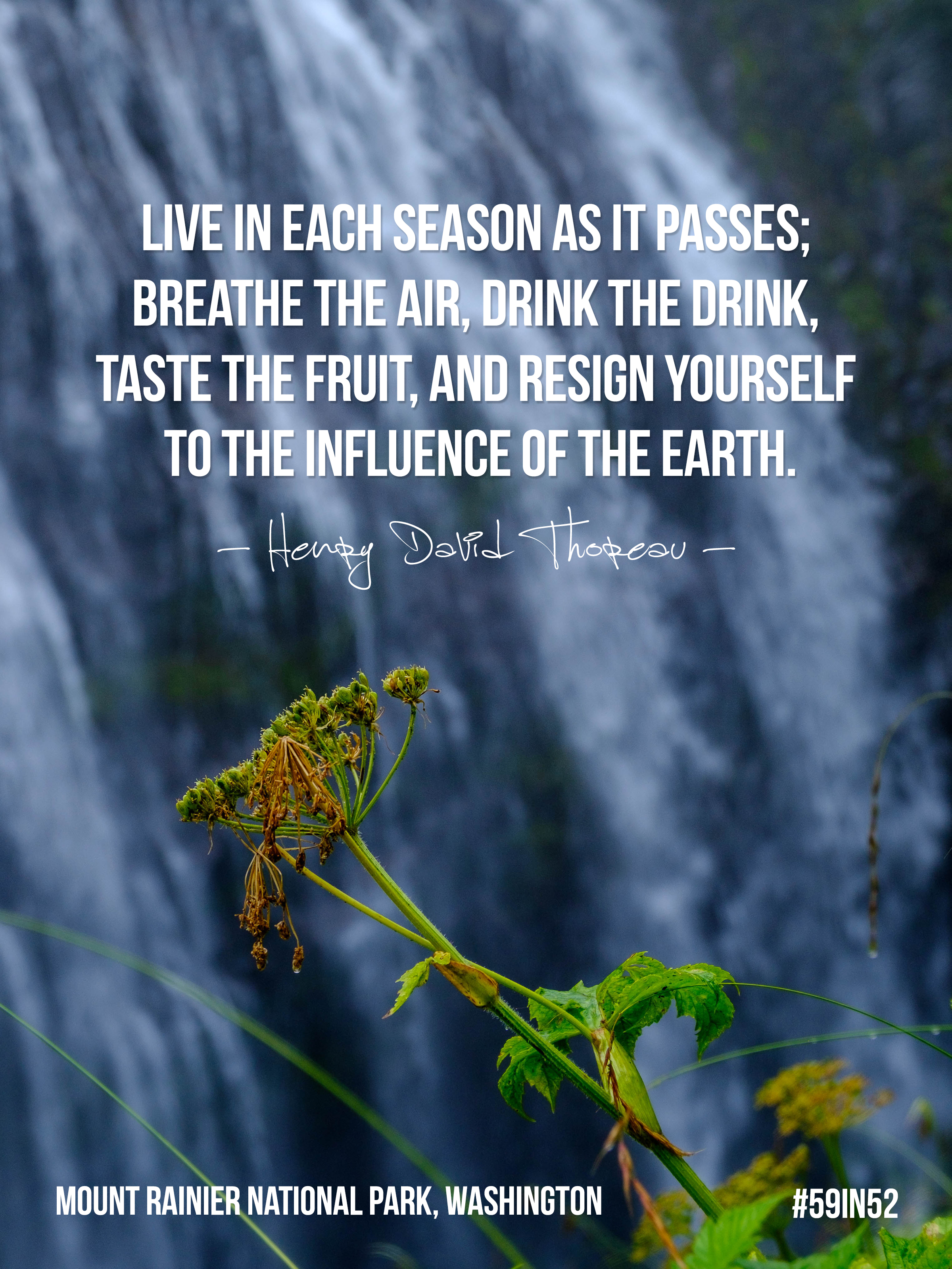 'Live each season as it passes; breathe the air, drink the drink, taste the fruit, and resign yourself to the influence of the Earth.' - Henry David Thoreau