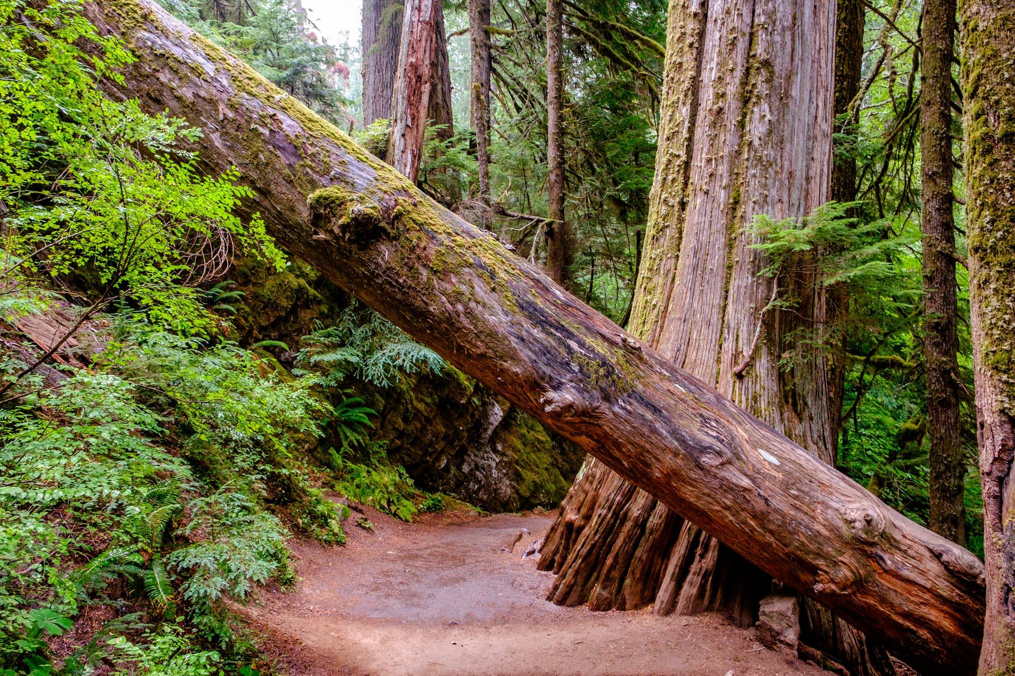 Mount Rainier National Park - 004.jpg