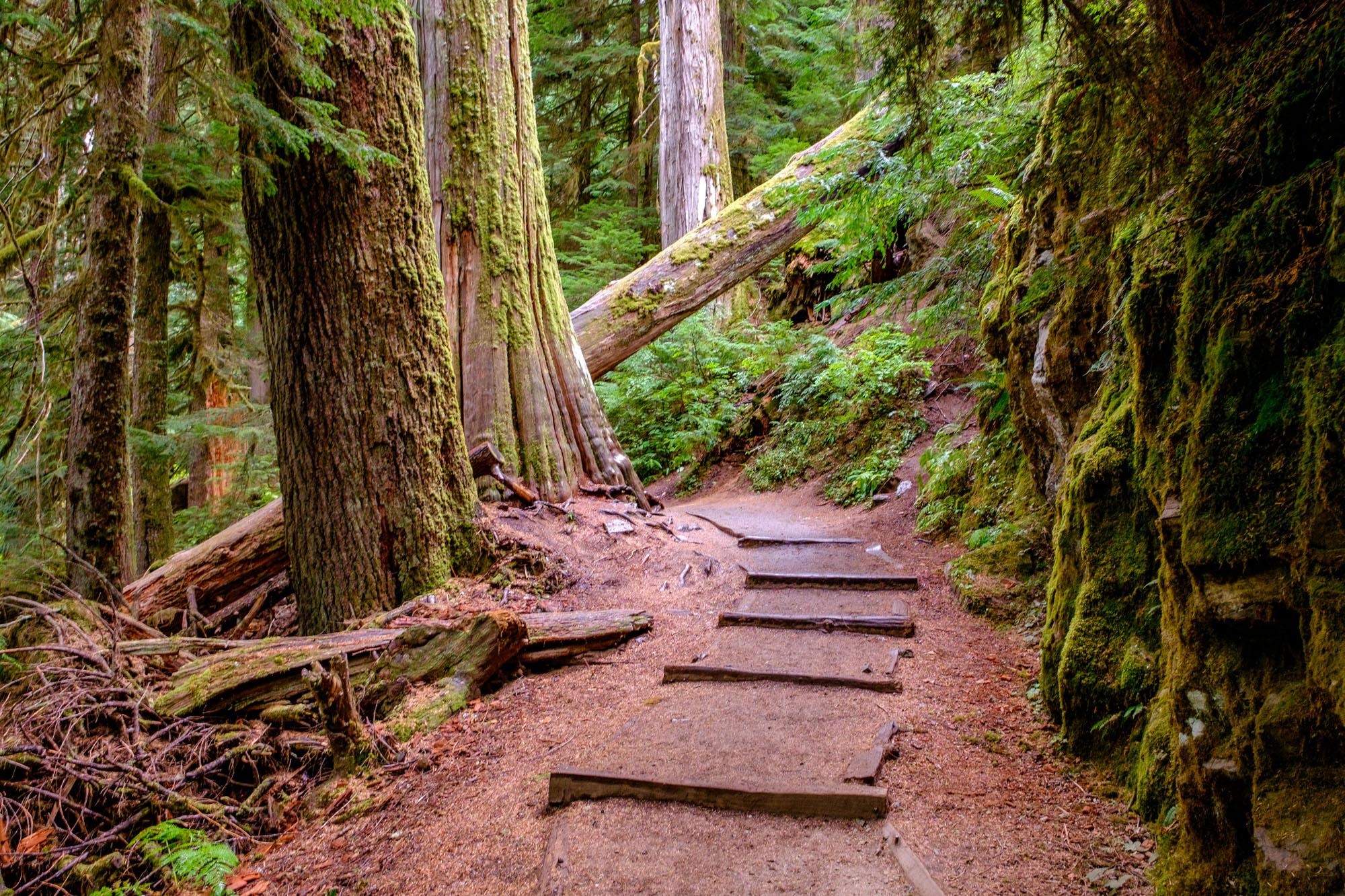 Mount Rainier National Park - 011.jpg