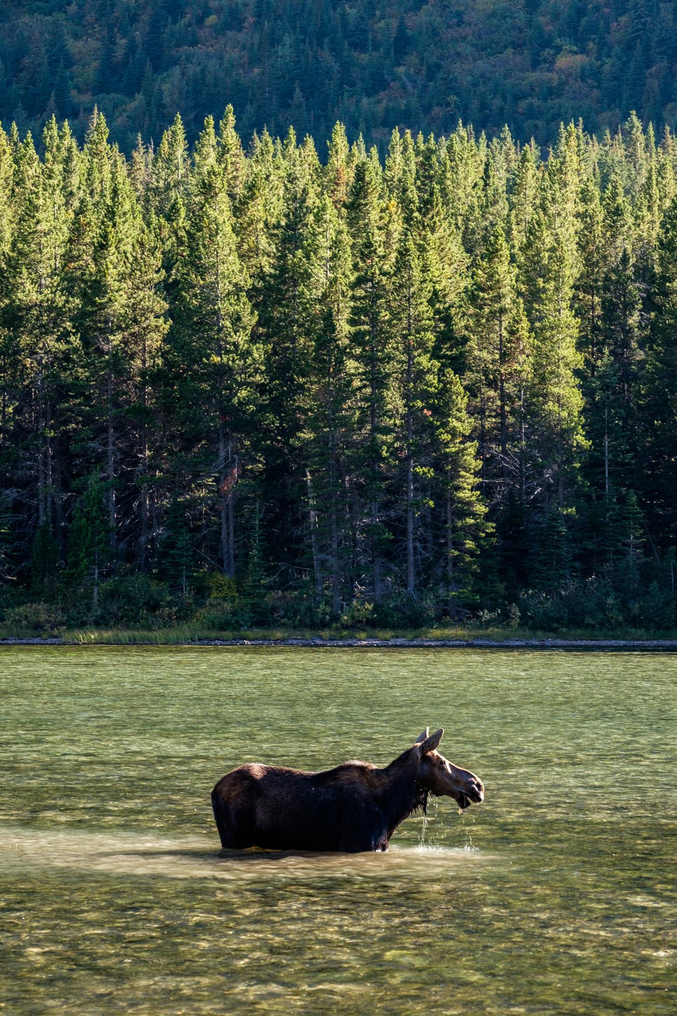 Glacier National Park - 040.jpg