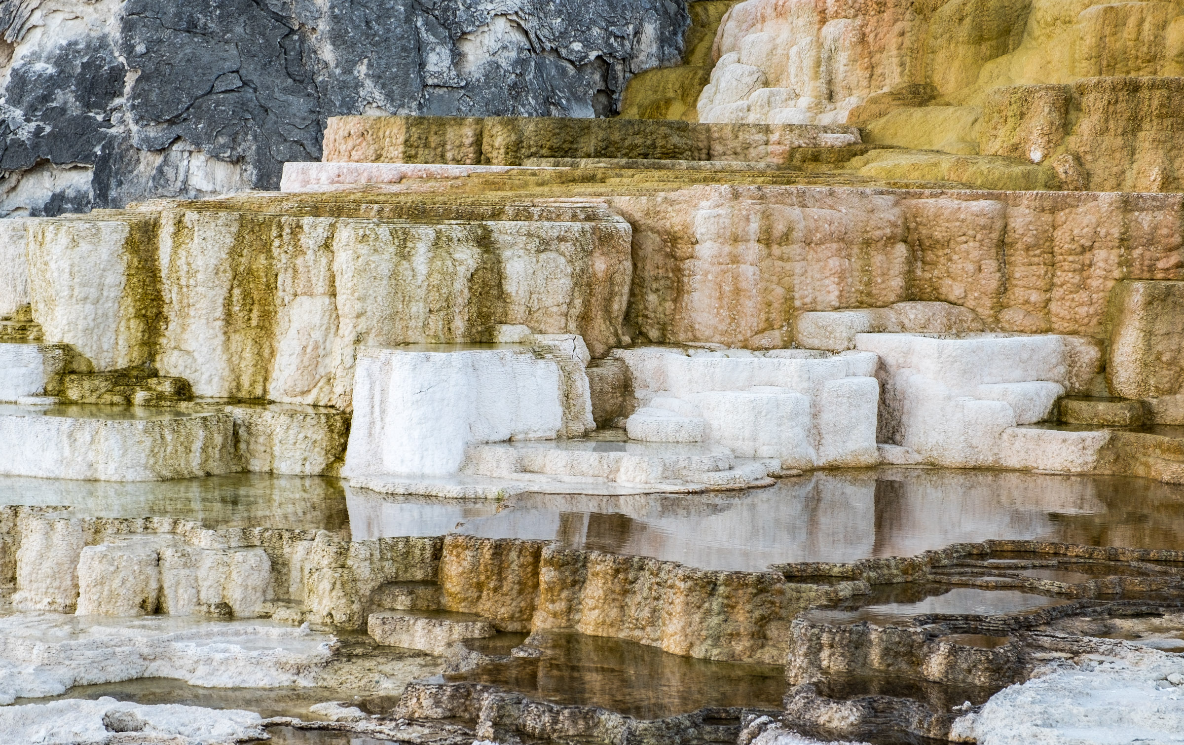 Travertine terraces at Mammoth Hot Springs in Yellowstone National Park.