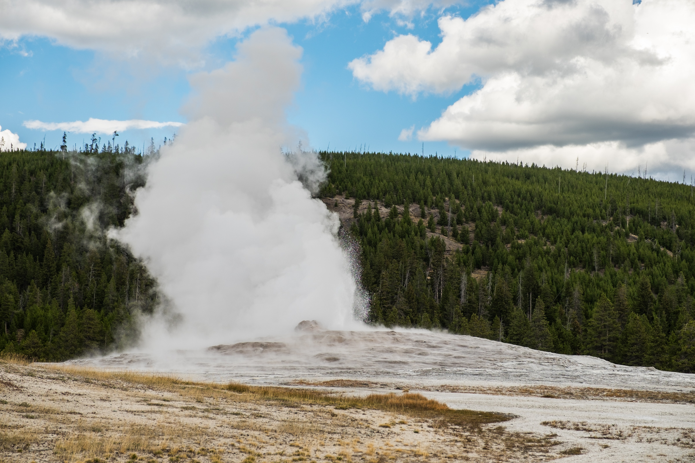 The famed Old Faithful geyser erupting right on time next to the Old Faithful Lodge.