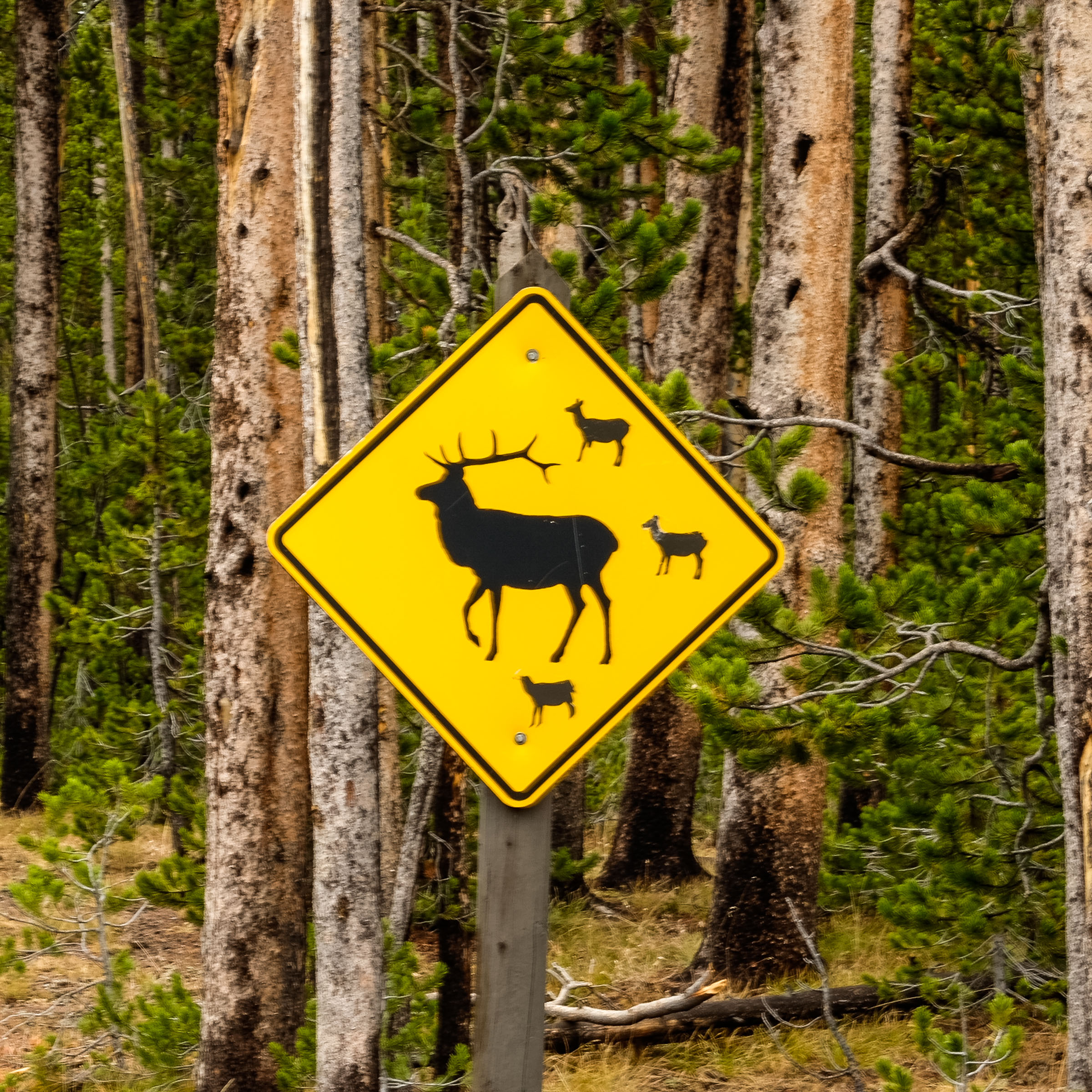 20160923-SP-Yellowstone National Park-_DSF7502.jpg