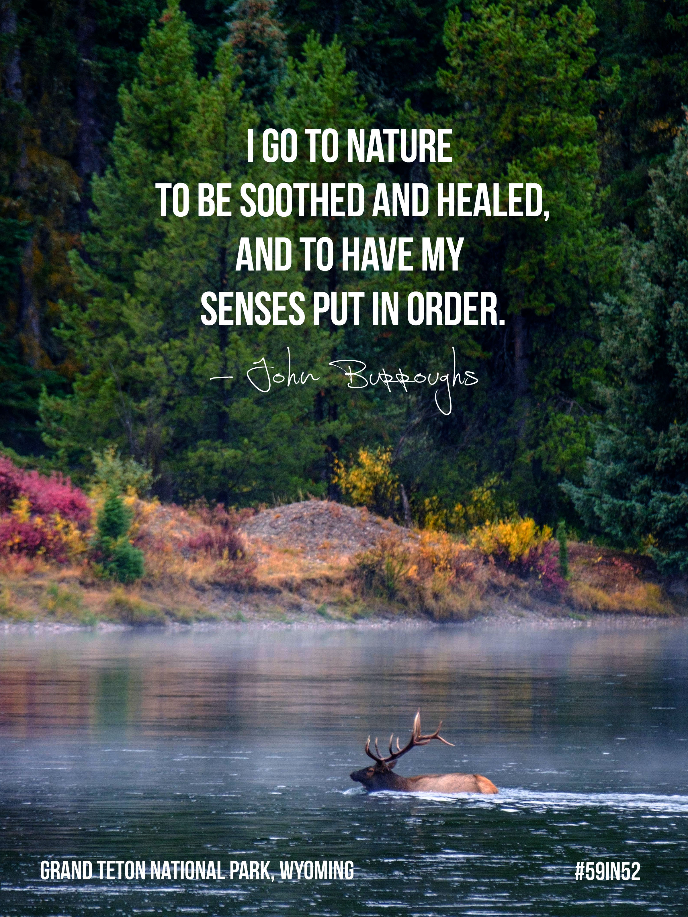 """""""I go to nature to be soothed and healed, and to have my senses put in order."""" - John Burroughs"""