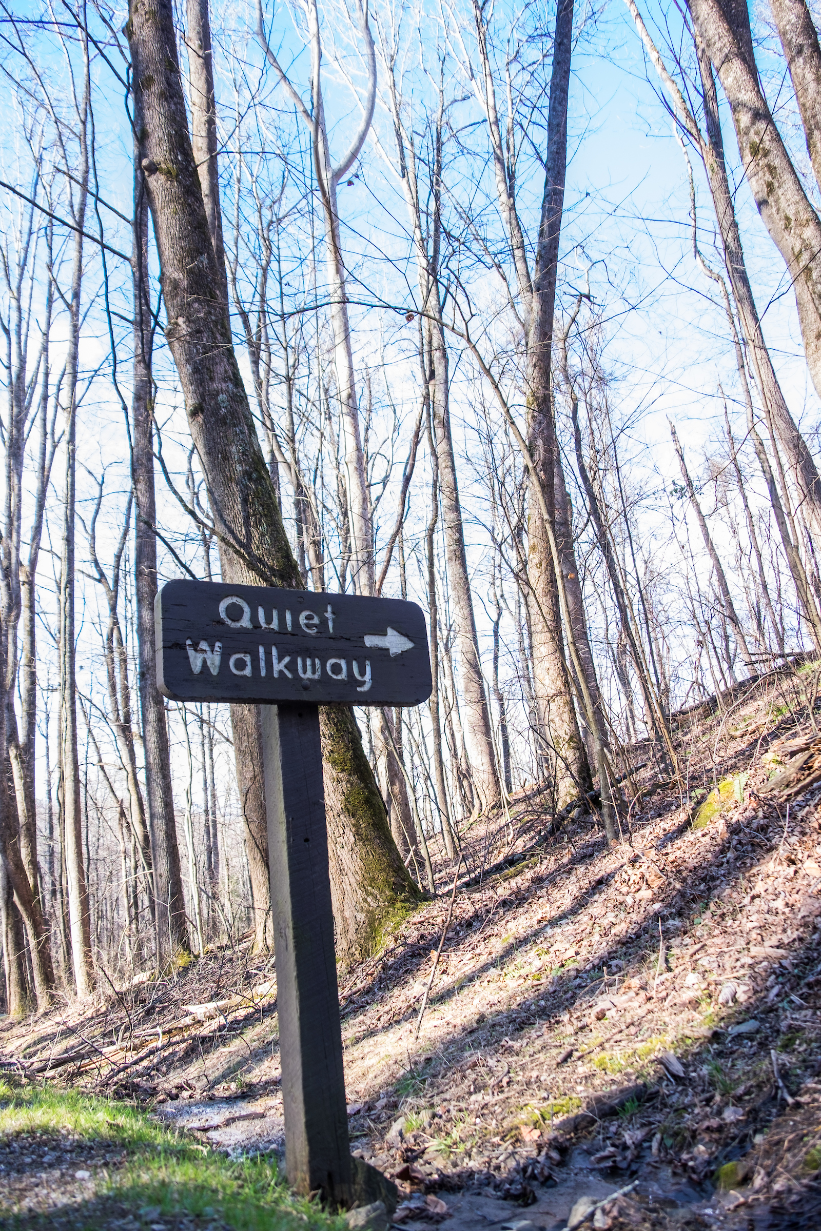 20160206-SP-Great Smoky Mountains-1050-_DSF1605.jpg