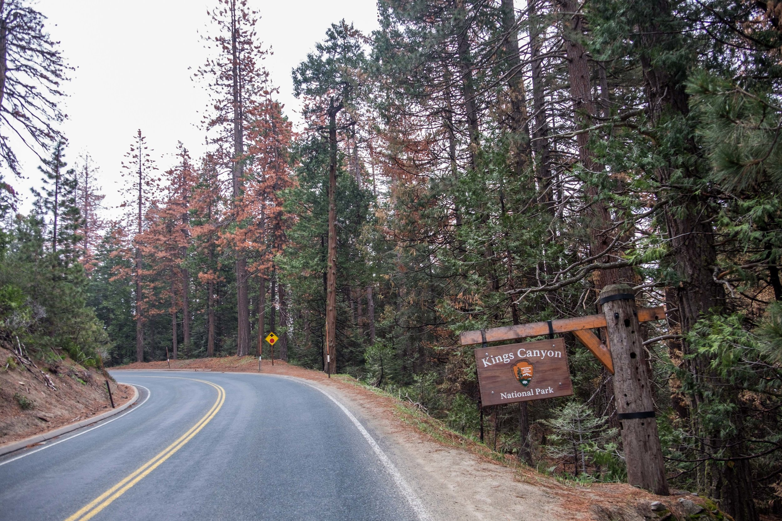 20160509-SP- Kings Canyon National Park-_DSF3706.jpg