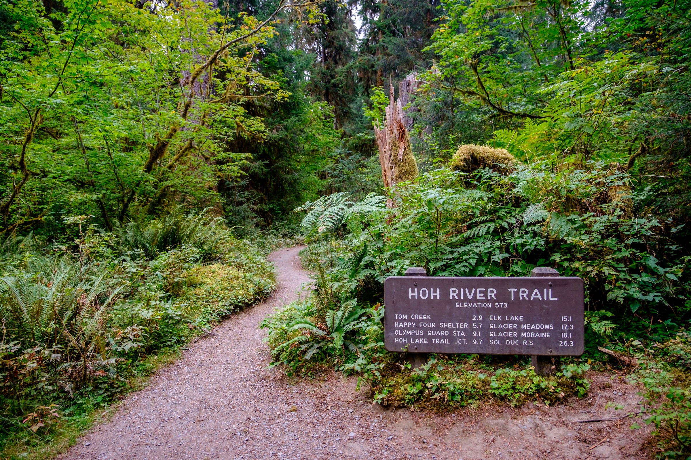 We hiked the Hoh River Trail....another amazing, but longer, hike.