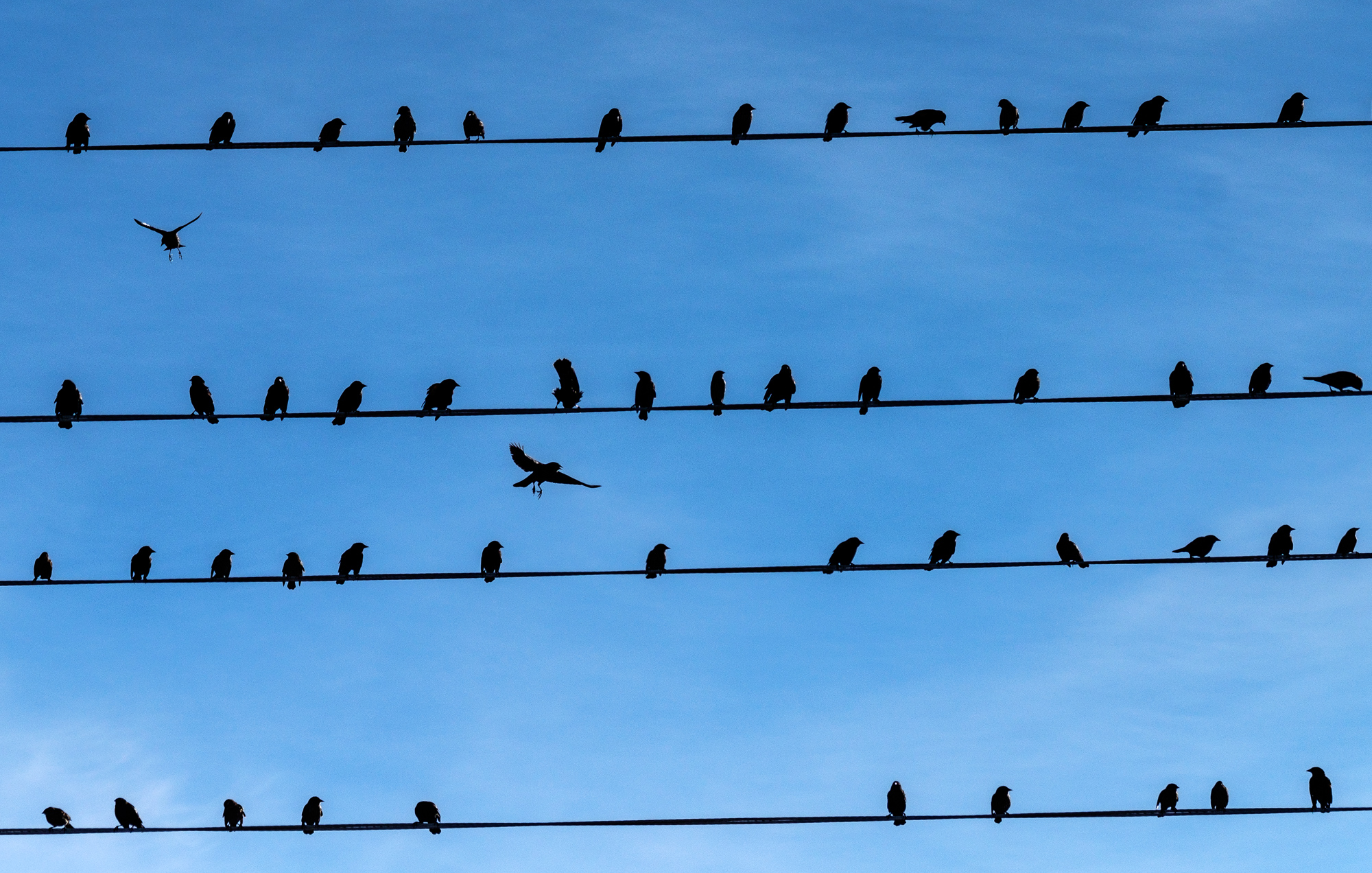 Birds on a wire.....trying to find a place to land.