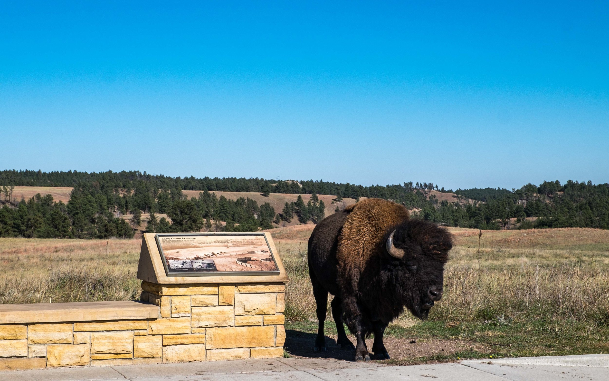 Welcoming committee at Wind Cave in South Dakota.